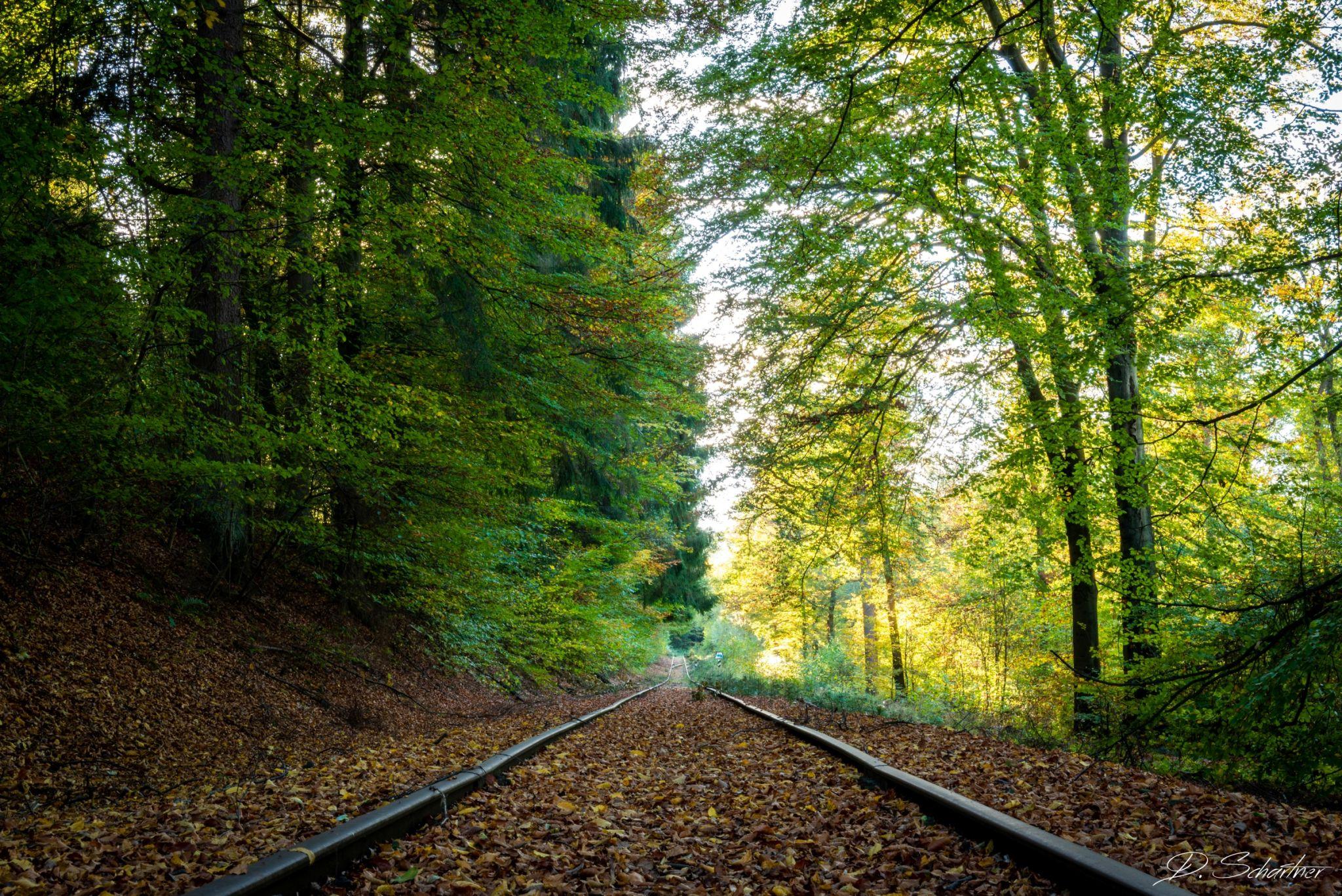 lost railway, Germany