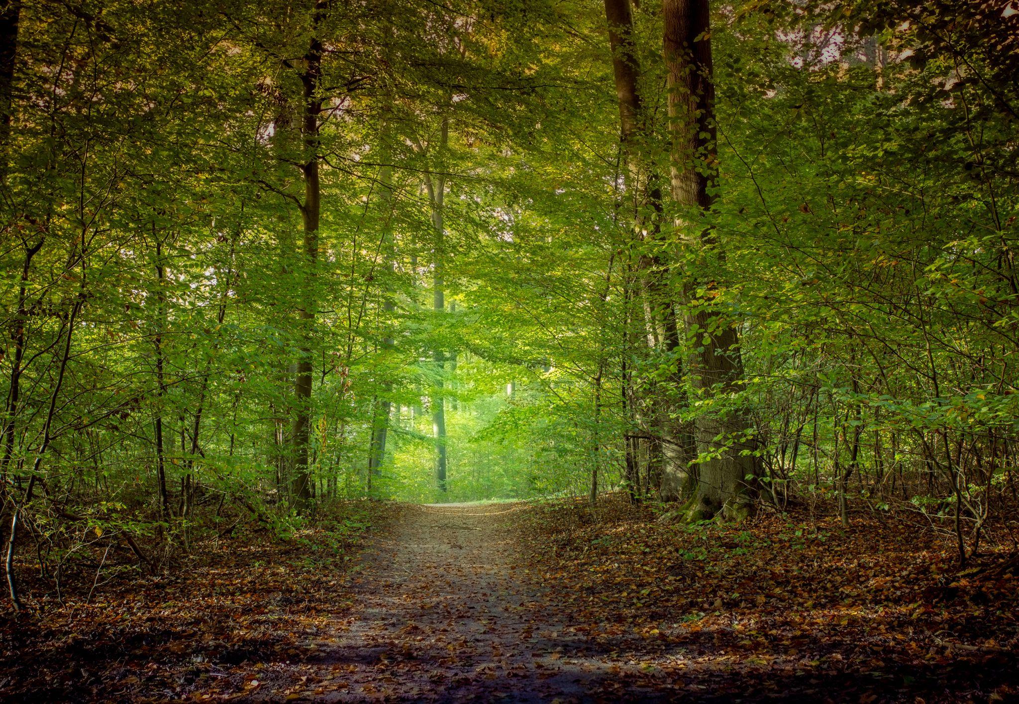 Woods Bad Falingbostel, Germany