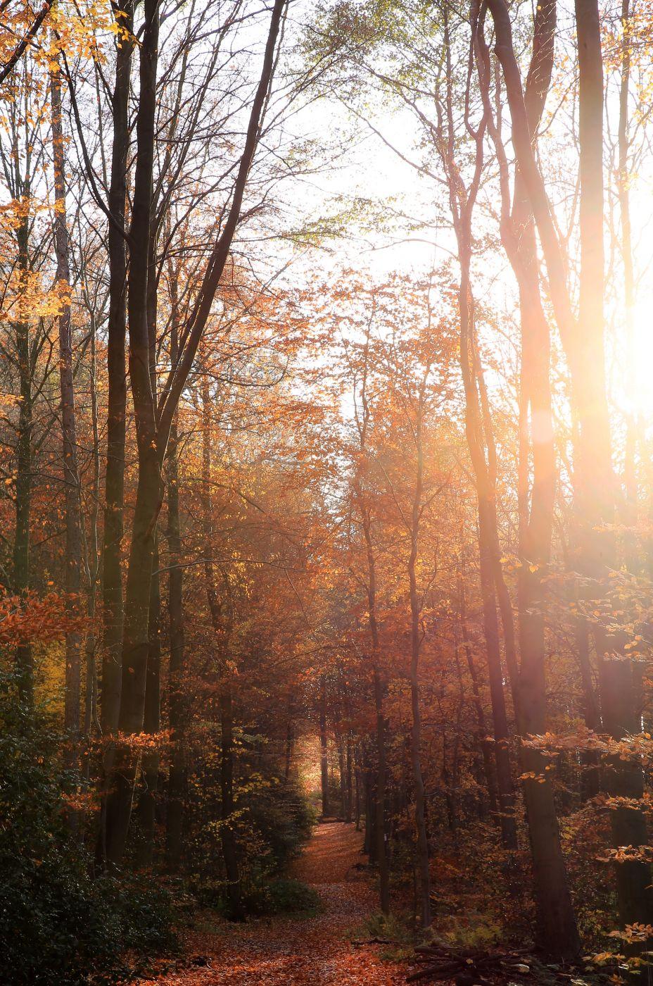 Fall Foliage, Germany