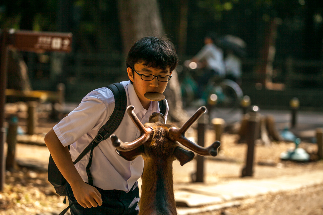 Feeding the deer Nara, Japan