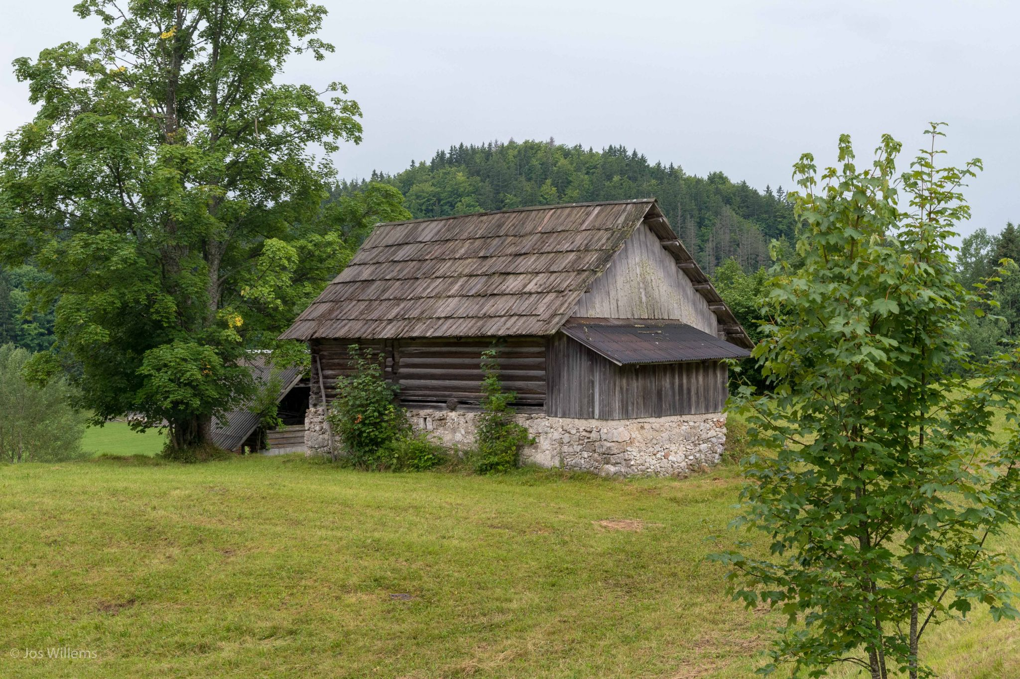 Koprivnik v Bohinju at the Pokljuka Plateau, Slovenia