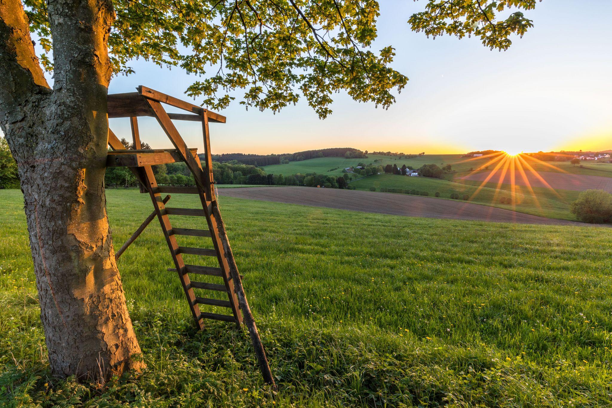 Halver Streitstück, Germany