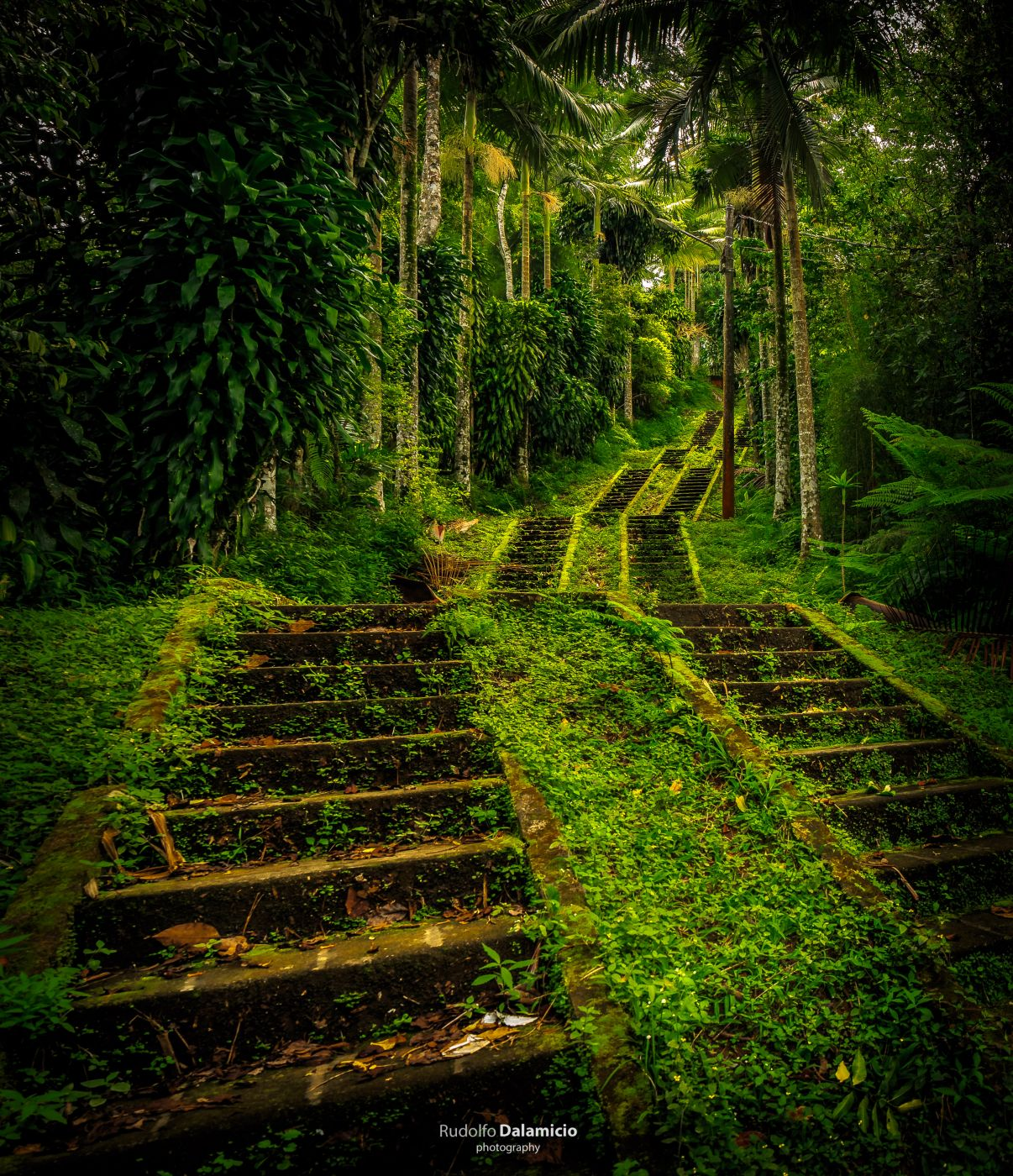 Jungle Stairs, Indonesia