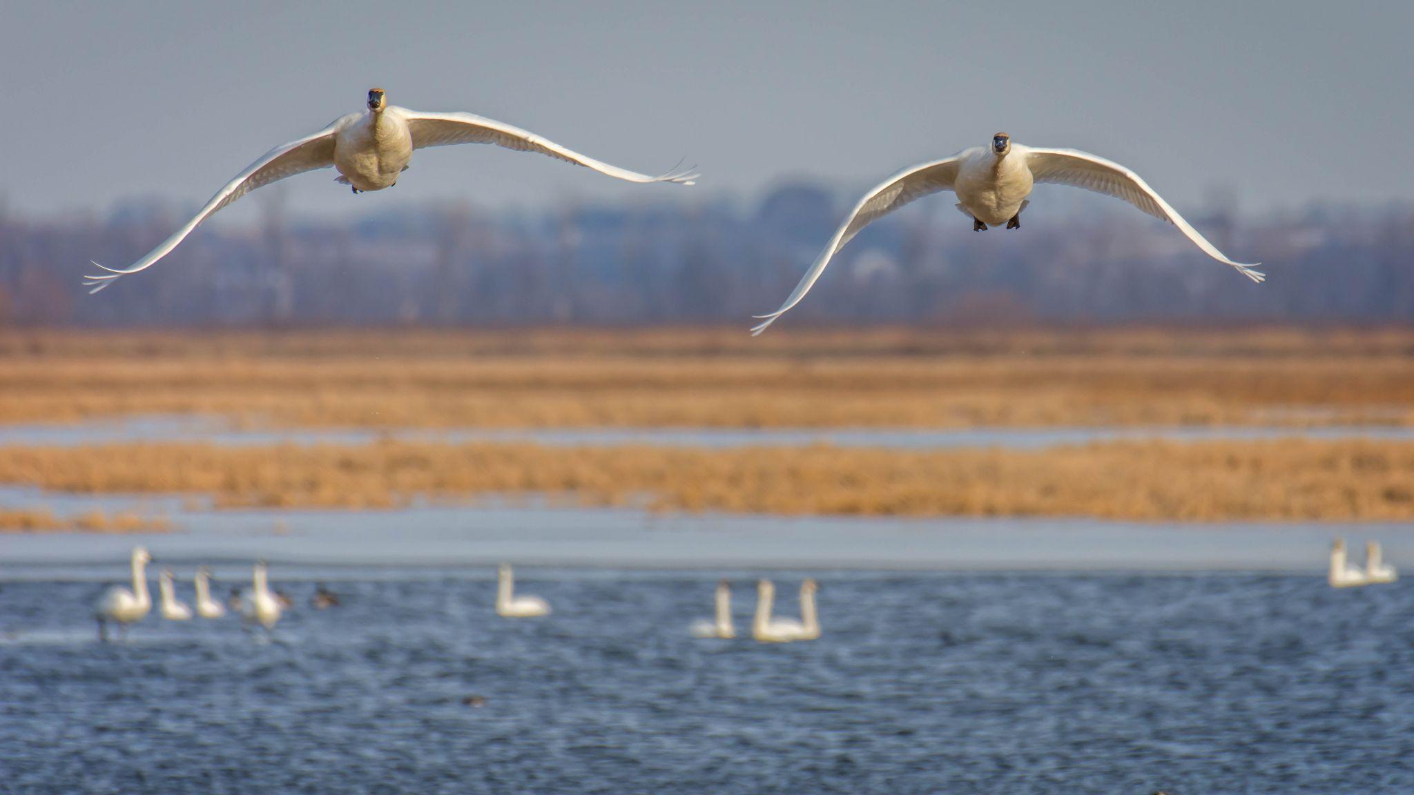 Loess Bluffs National Wildlife Refuge, USA