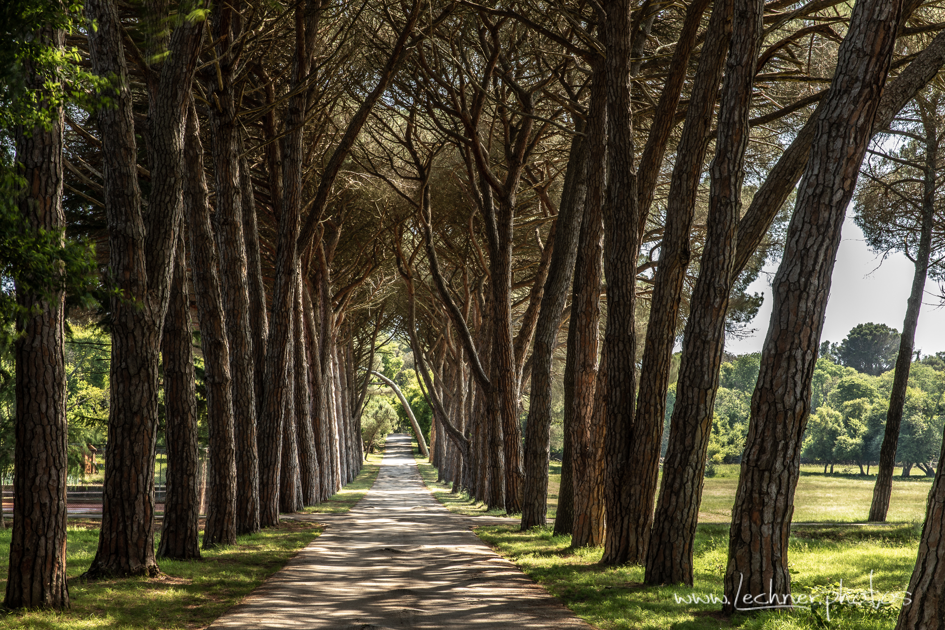 Pine alley at Brijuni National Park, Croatia