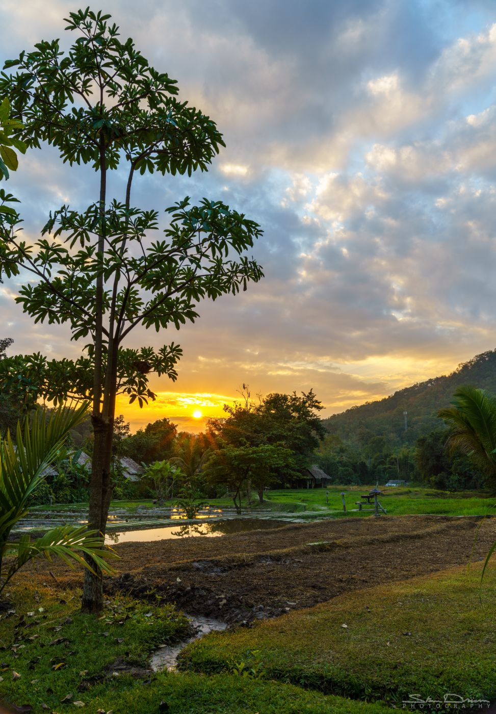 Ricefield sunset, Thailand
