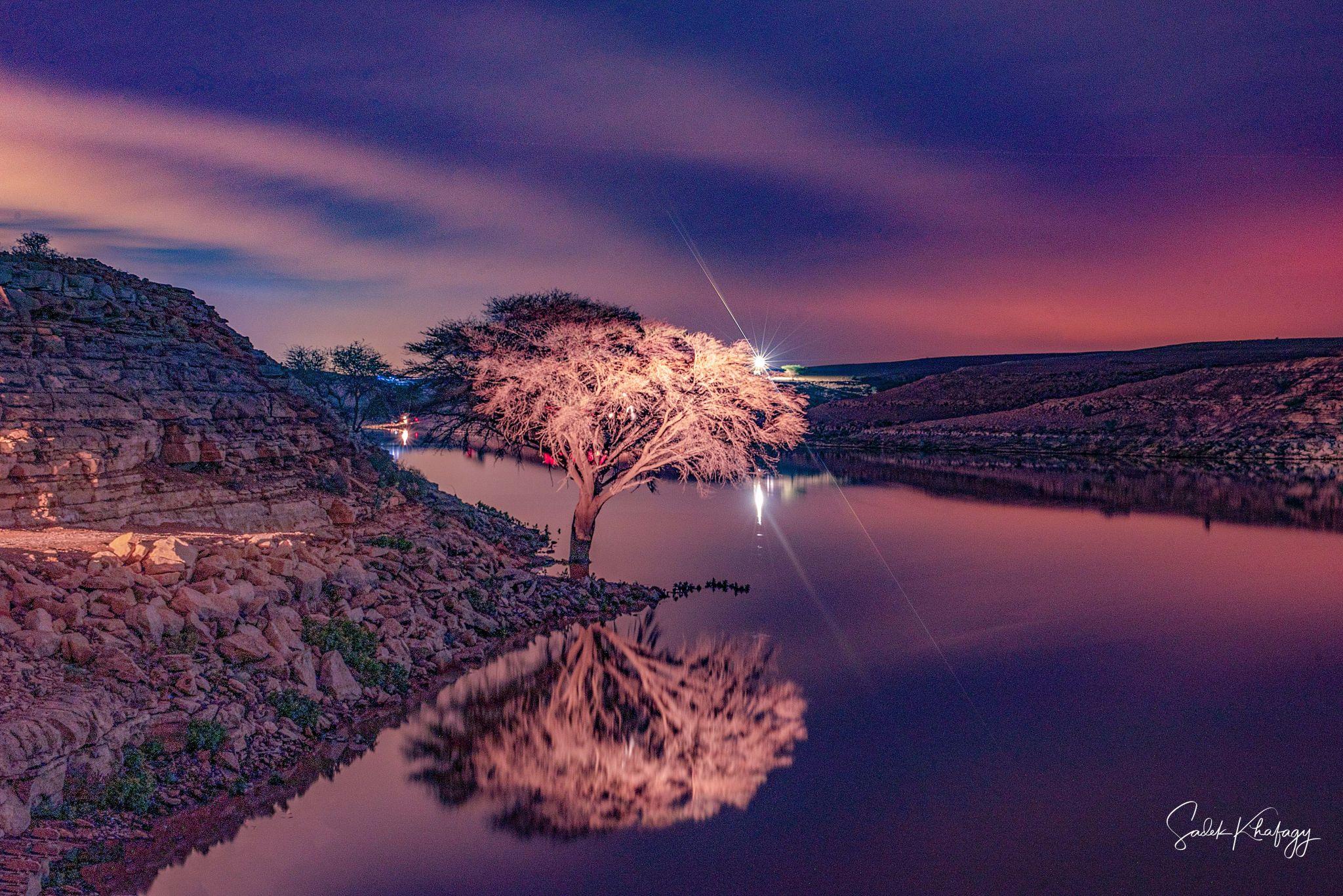 Salboukh Biggest tree, Saudi Arabia