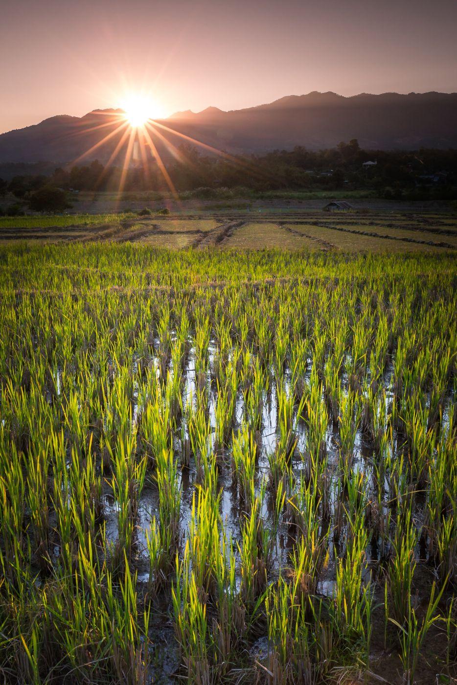 Wetlands, Thailand