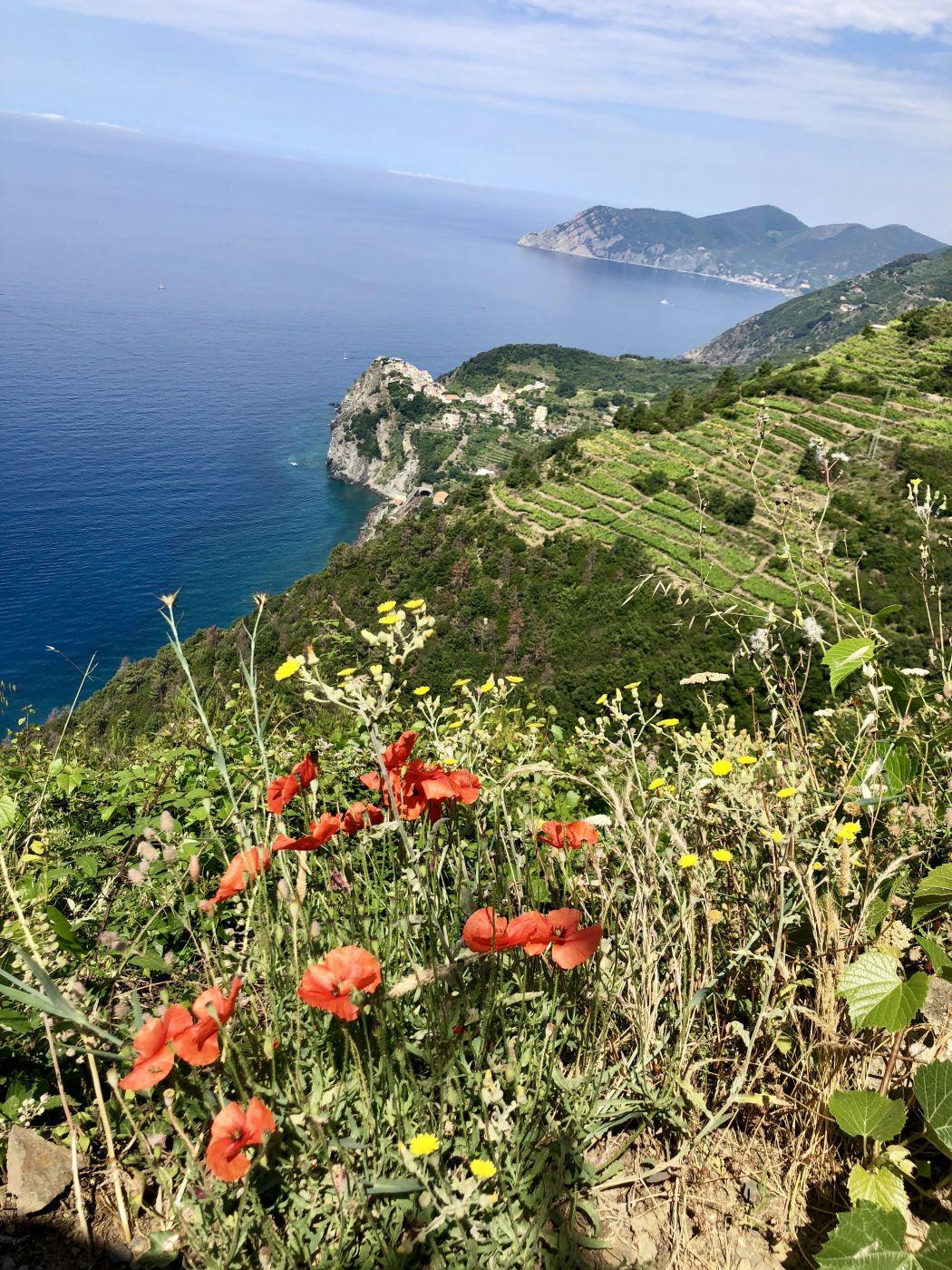 Paths above Riomaggiore, Italy