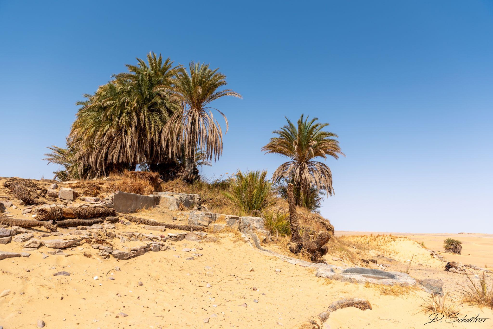 Oasis in the desert, Egypt