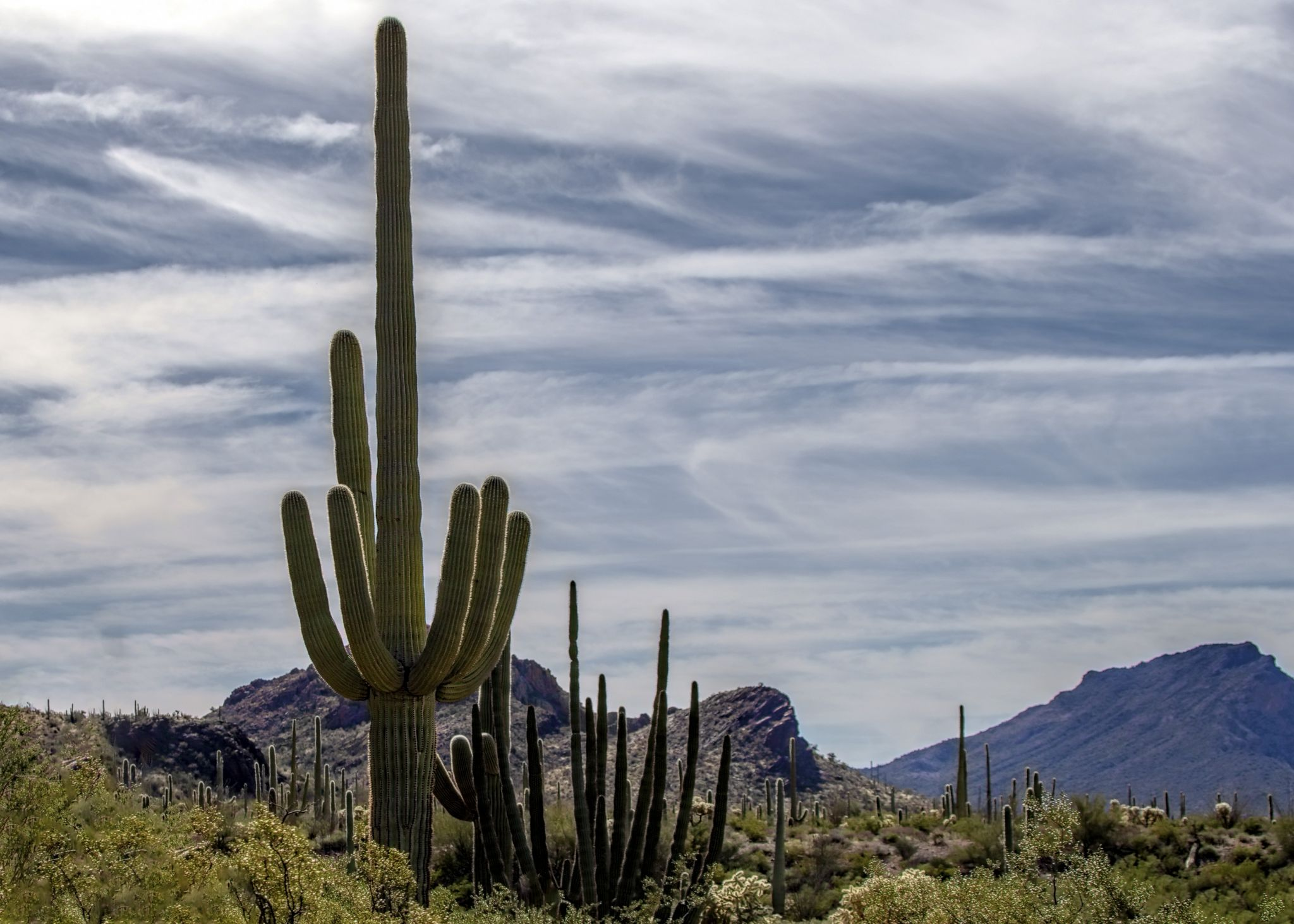 Organ Pipe Cactus National Monument, USA