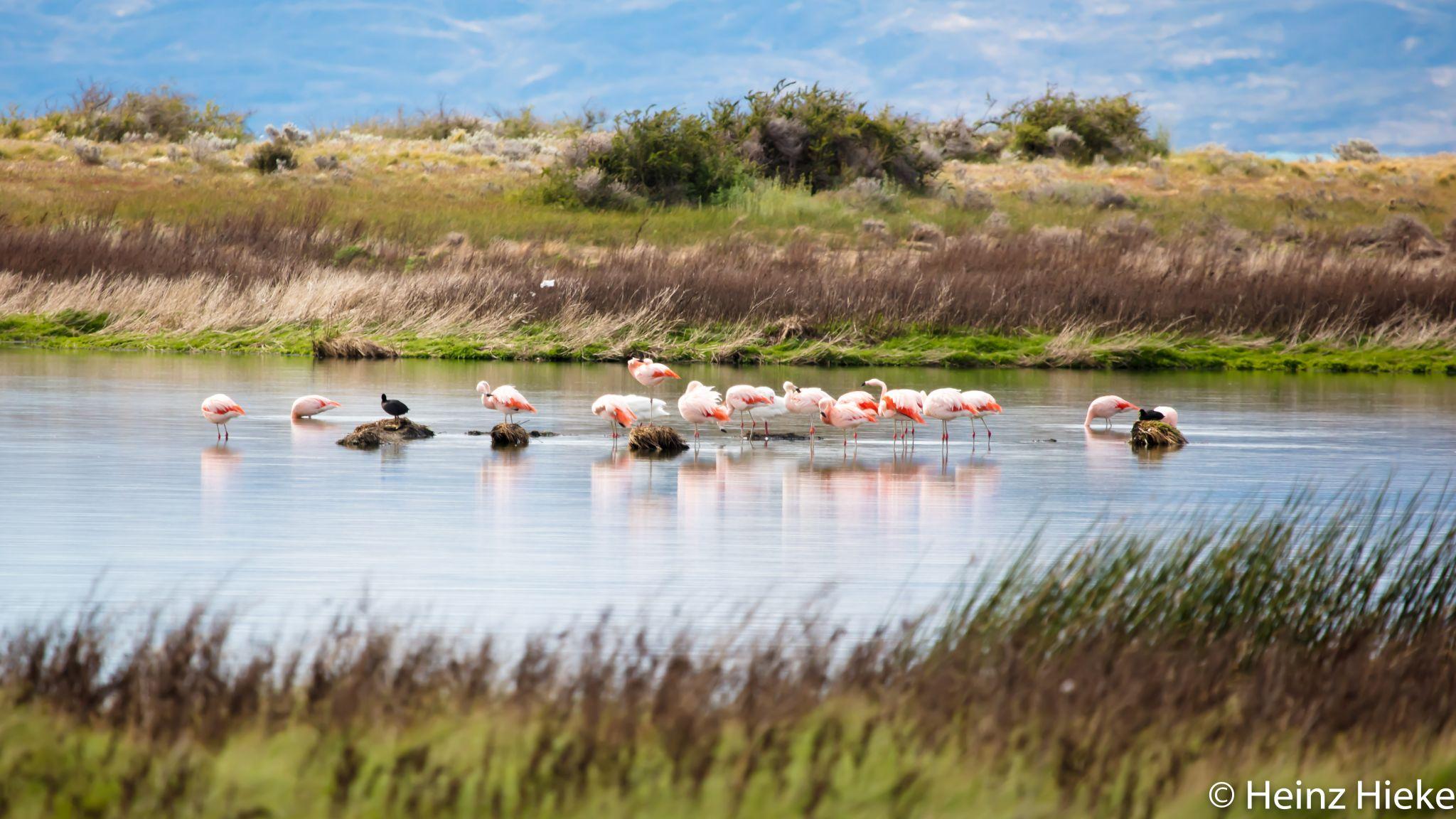 Reserva Laguna Nimez, Argentina