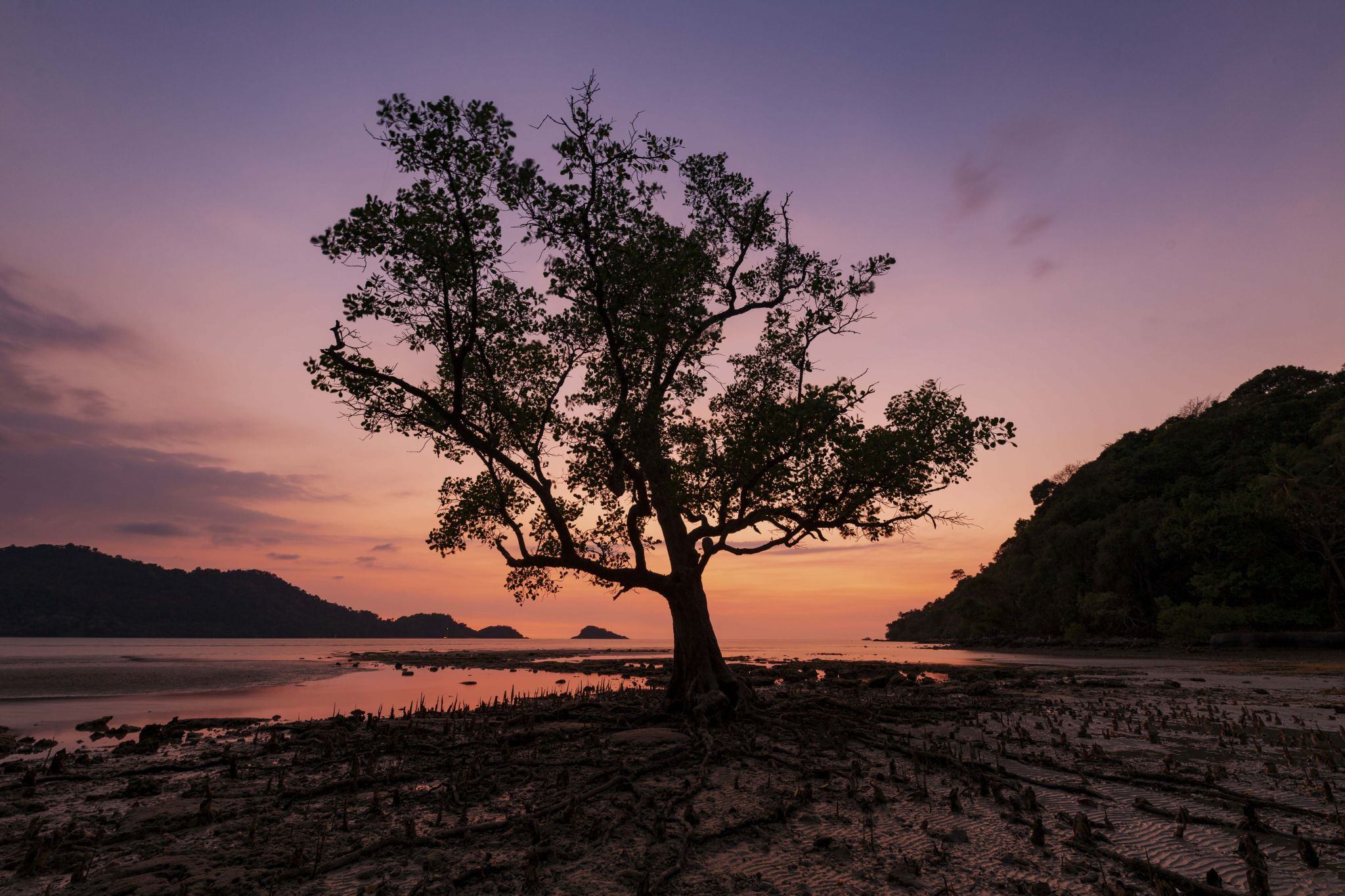 Sunset Tree, Thailand