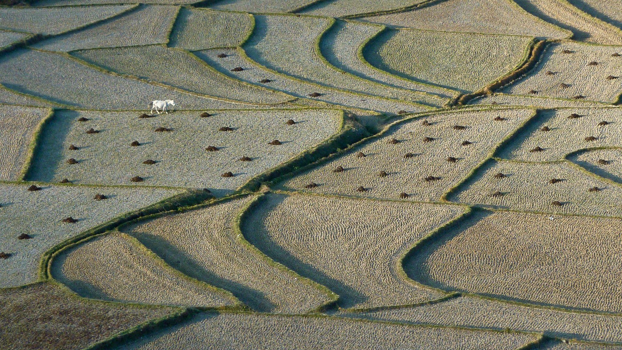 fields near Paro, Bhutan