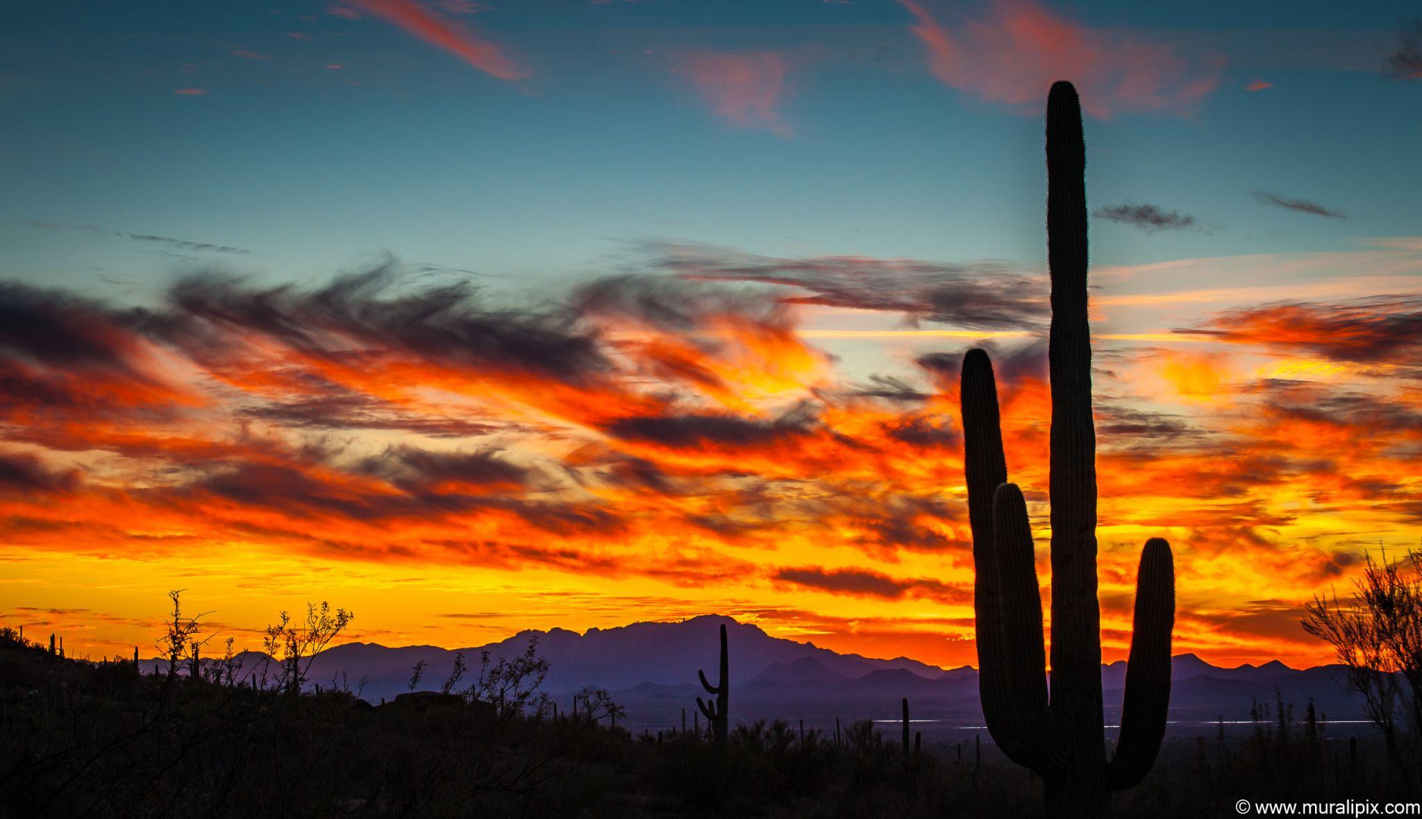 Giant Saguaro @ Sunset, USA