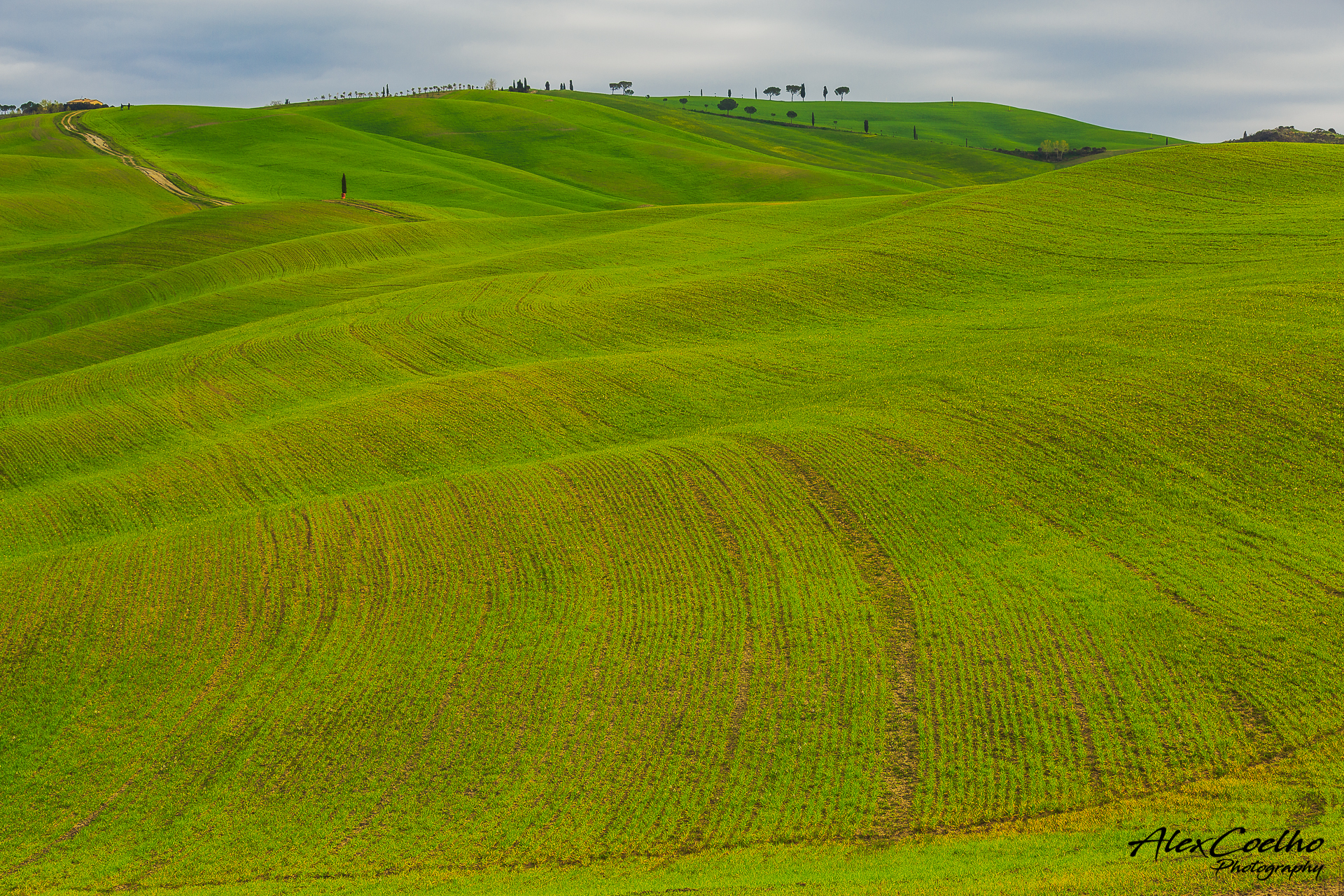 green Val D'Orcia rolling hills, Italy