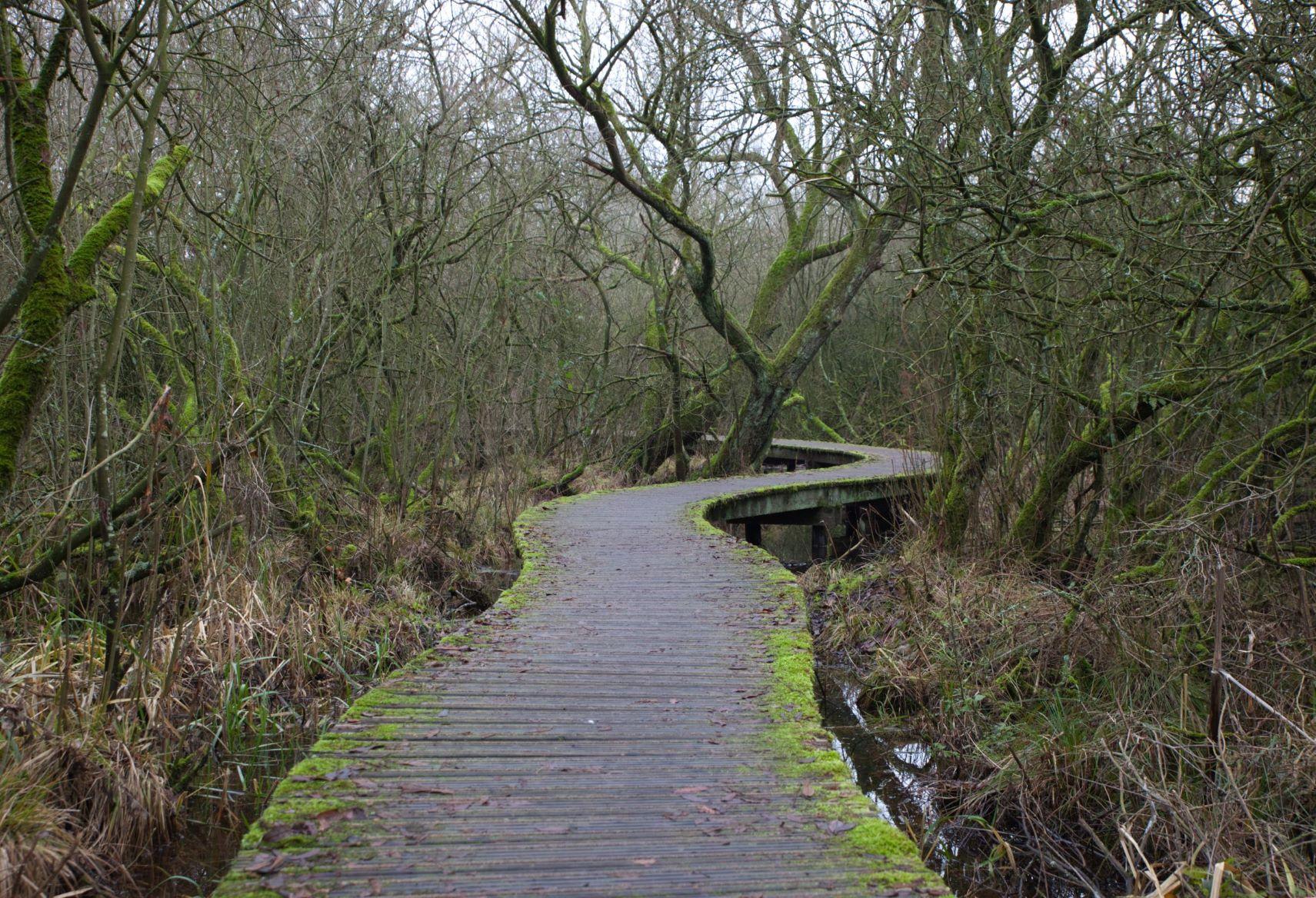 Moerputten natuurgebied, Netherlands