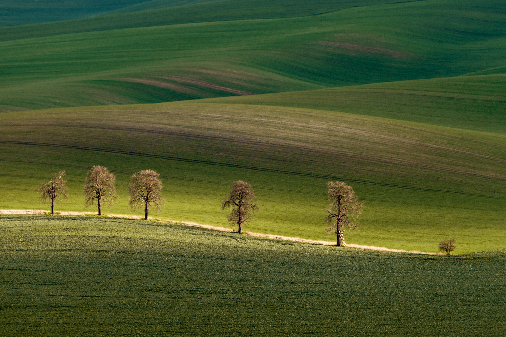 Chestnuts Avenue, Moravia, Czech Republic