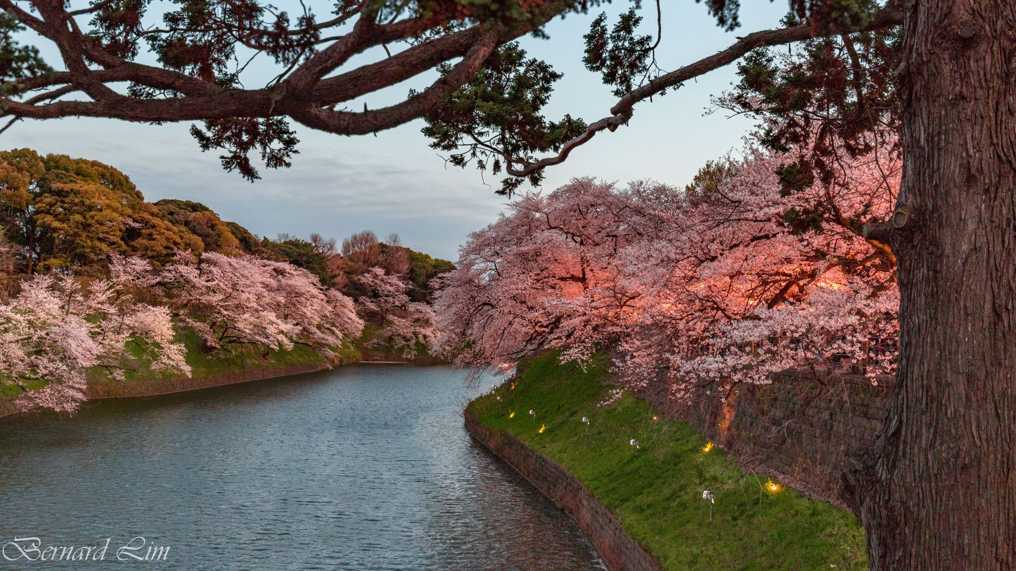 Enjoy Cherry Blossoms in Tokyo, Japan