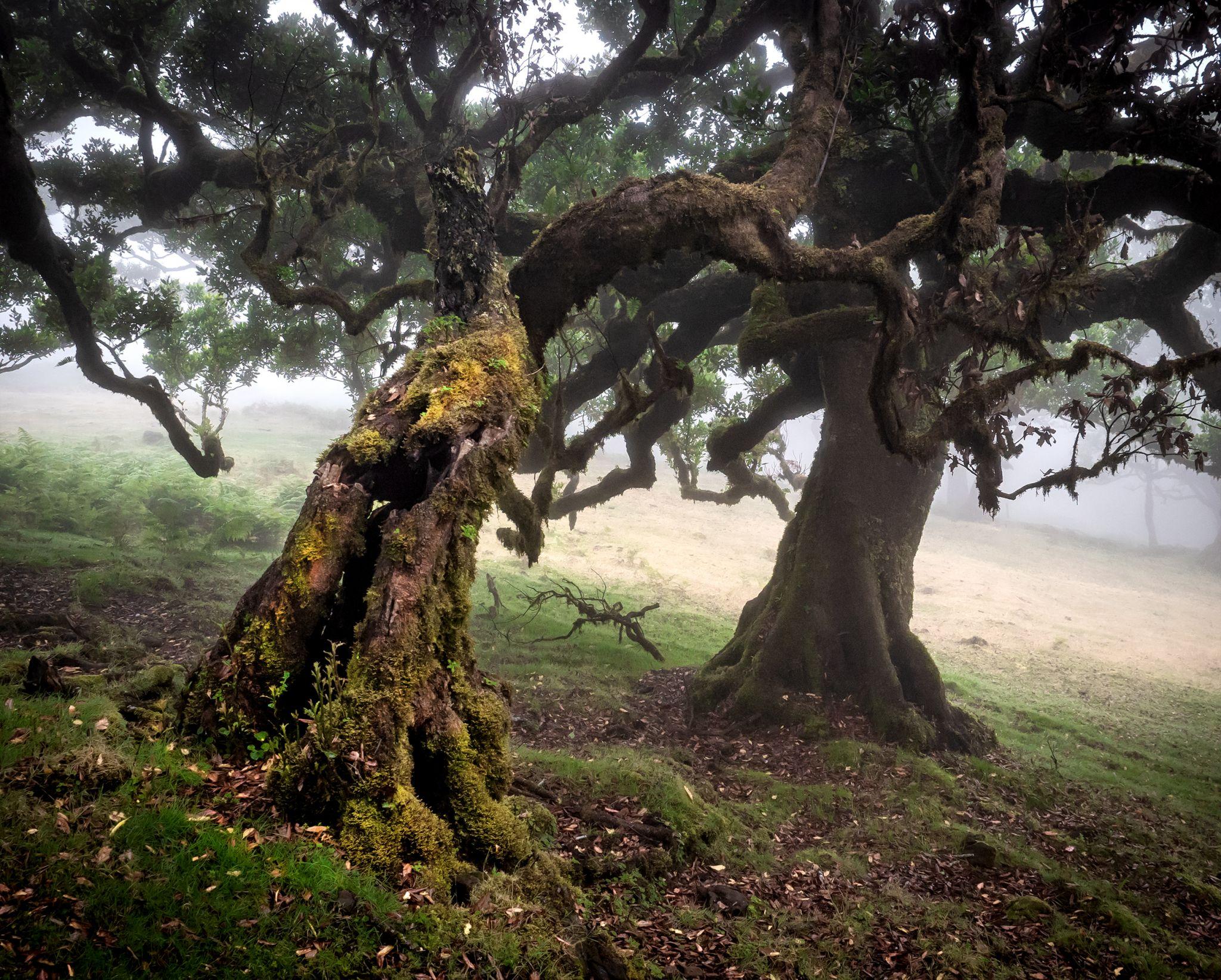 Fairy Wood, Portugal