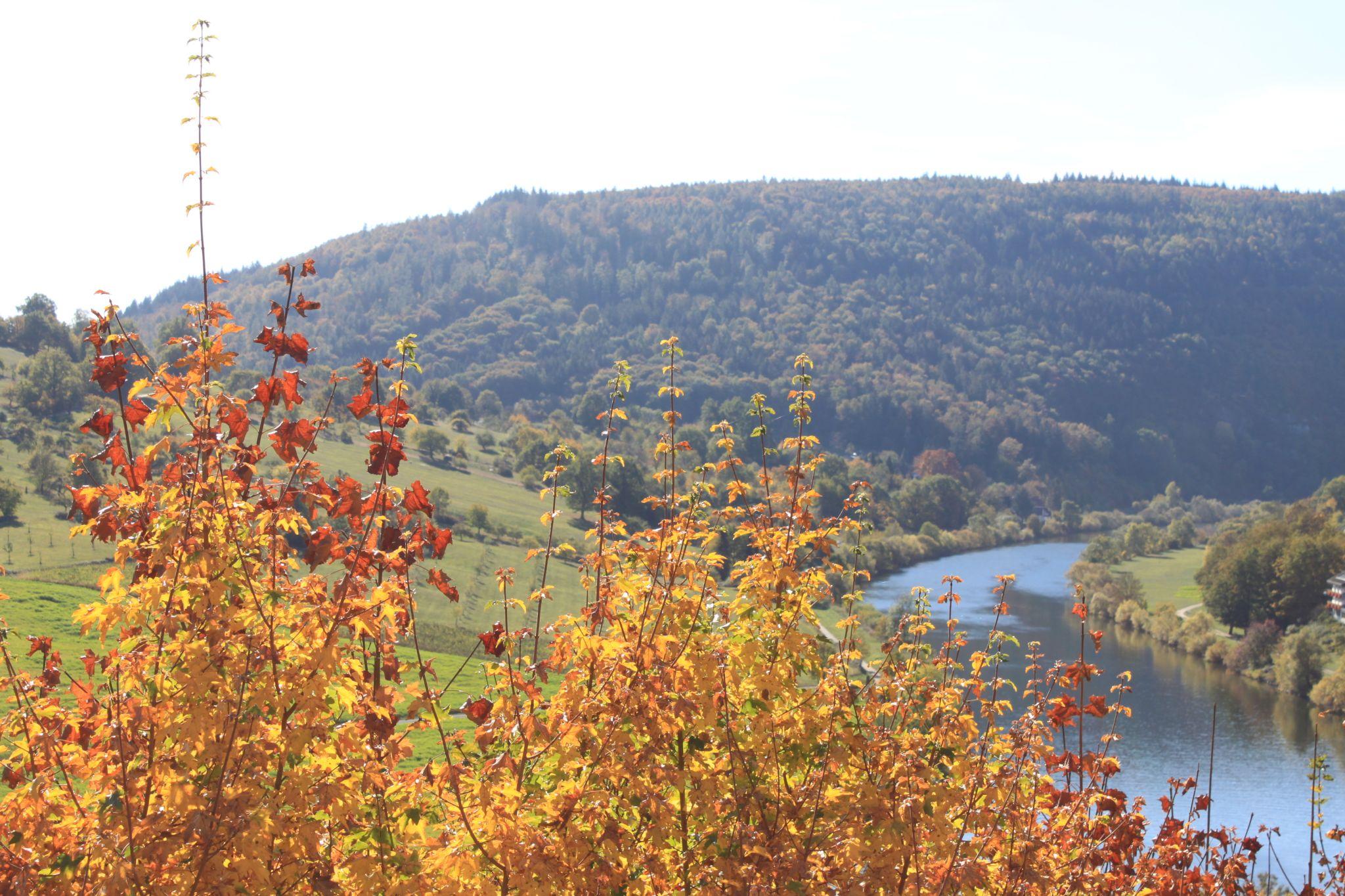 Autumn on the Neckar, Germany