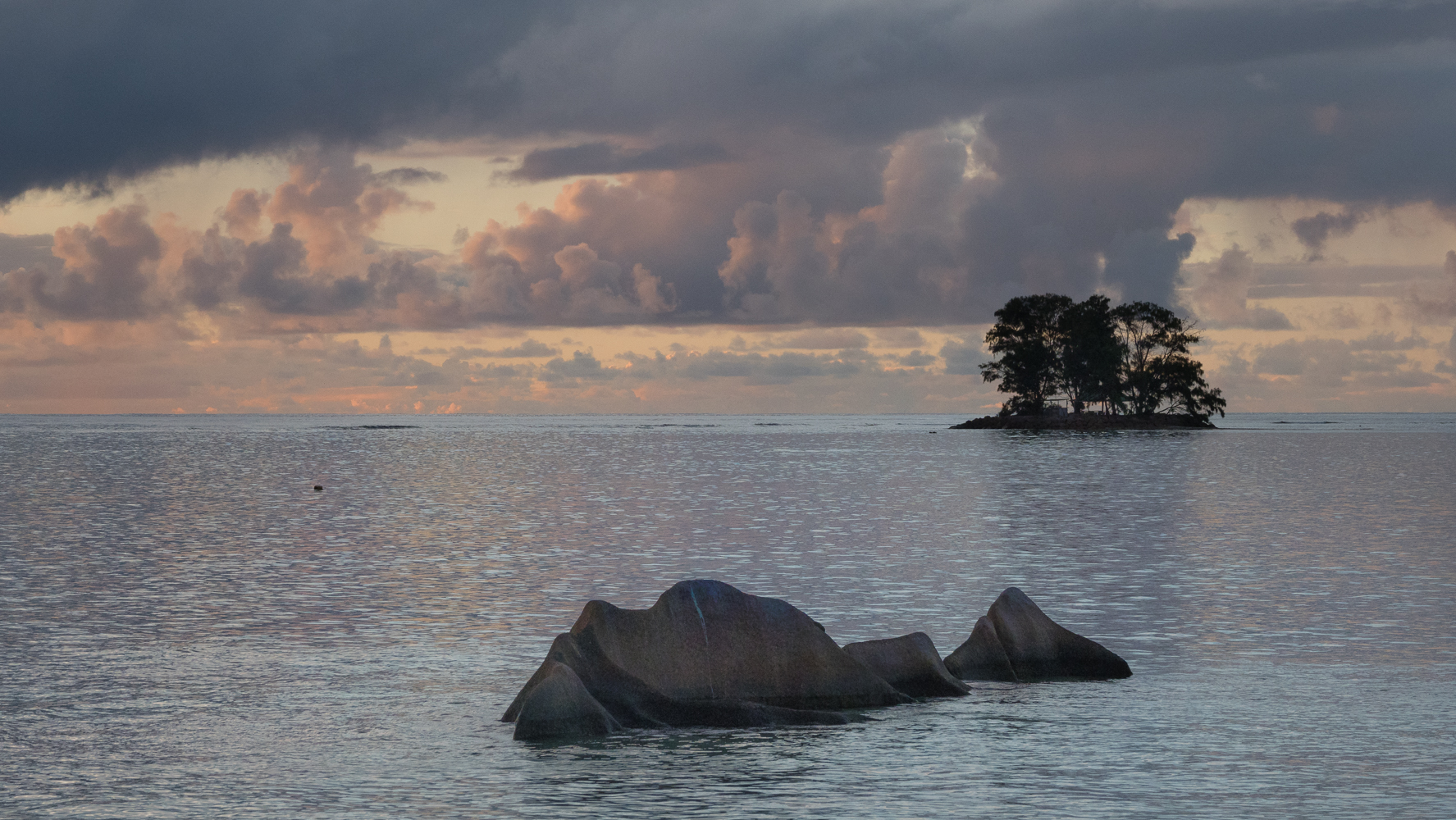 La Digue tree on the water, Seychelles