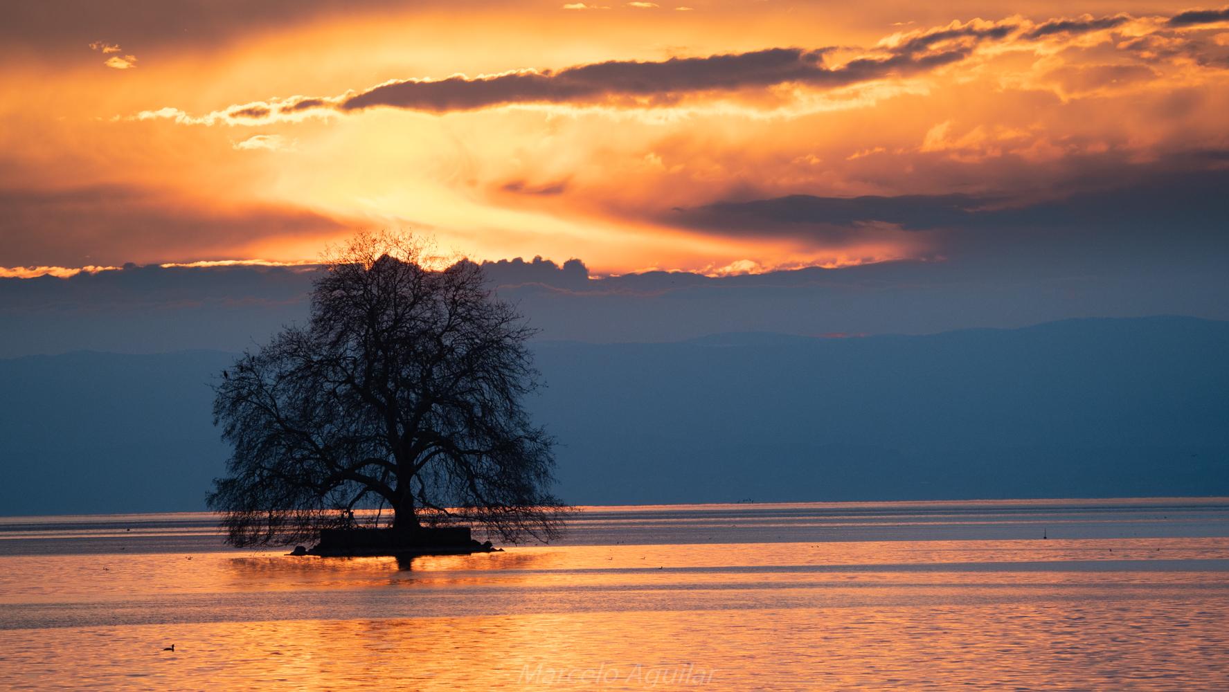 Solitary tree in Villeneuve, Switzerland