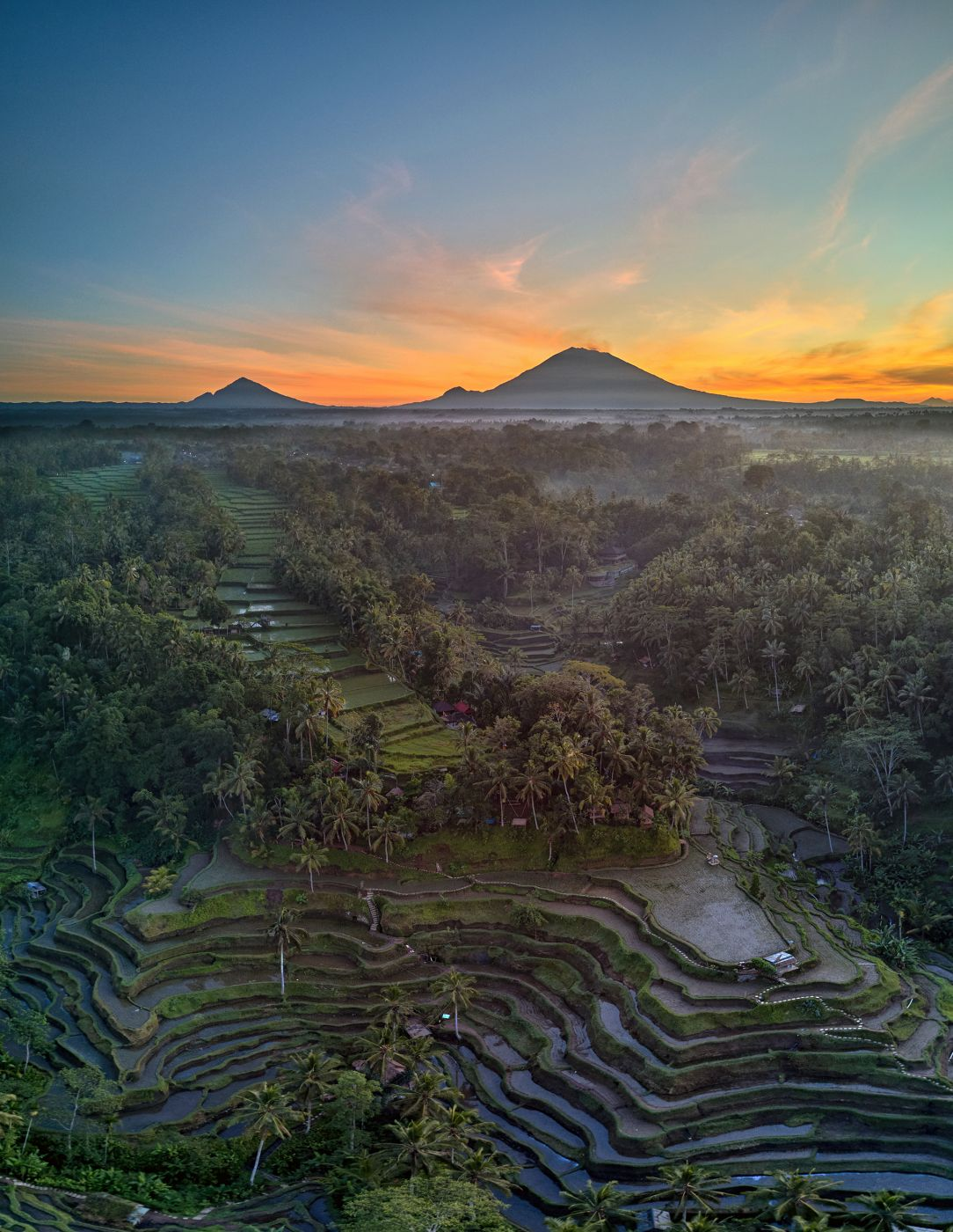 Tegallalang Rice Terraces, Indonesia