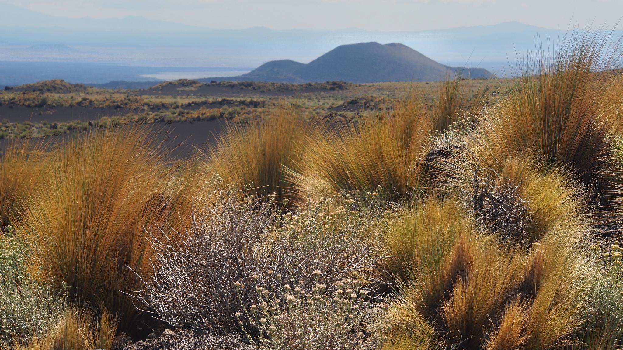vegetation of the steppe, Argentina