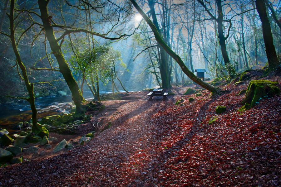 Ivybridge woods, Devon, United Kingdom