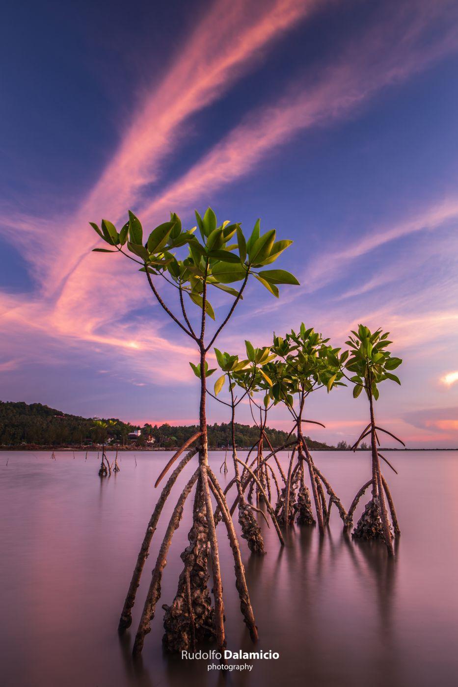 Mangrove Maniac, Thailand