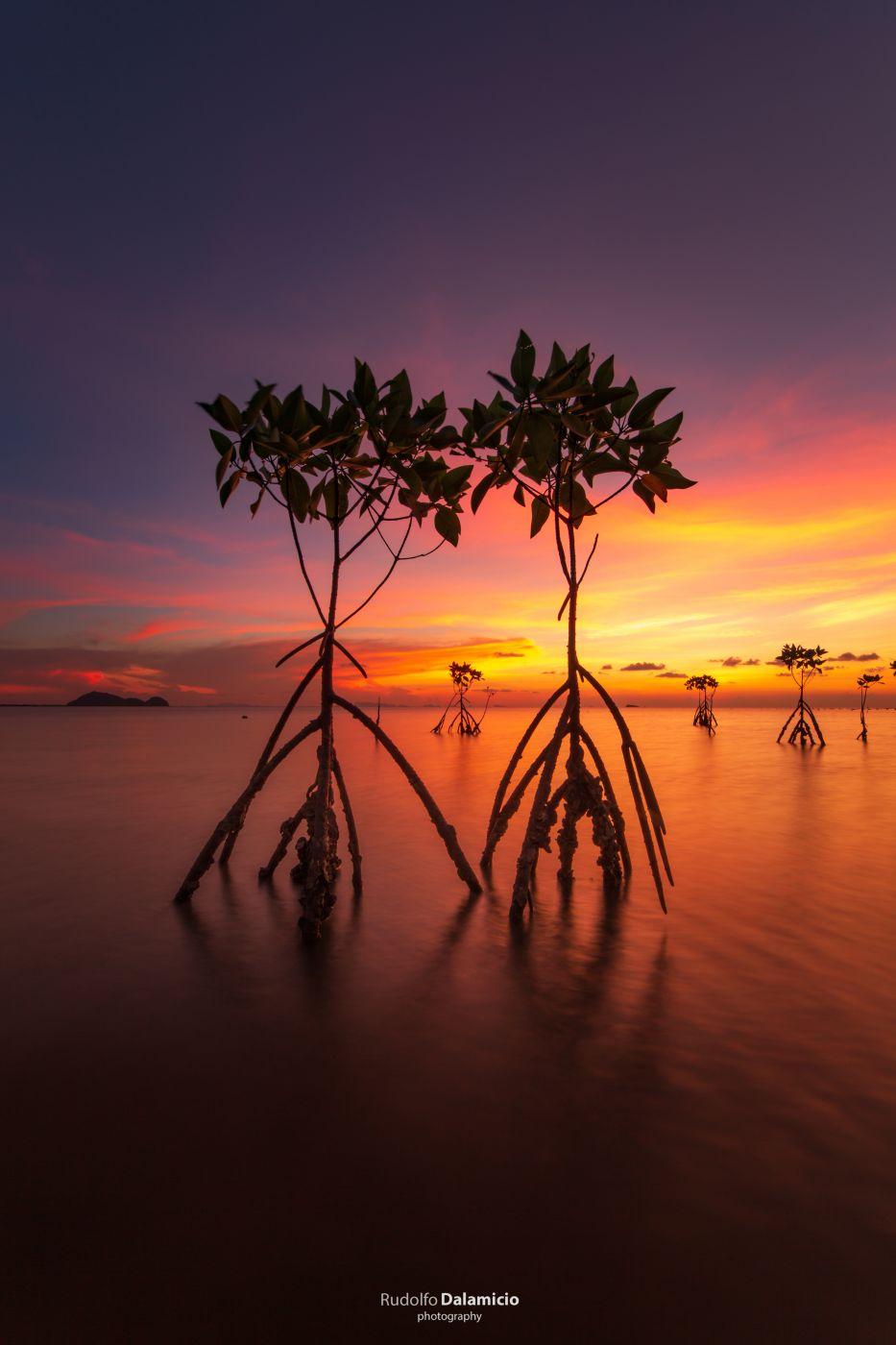 Mangrove Sunset, Thailand