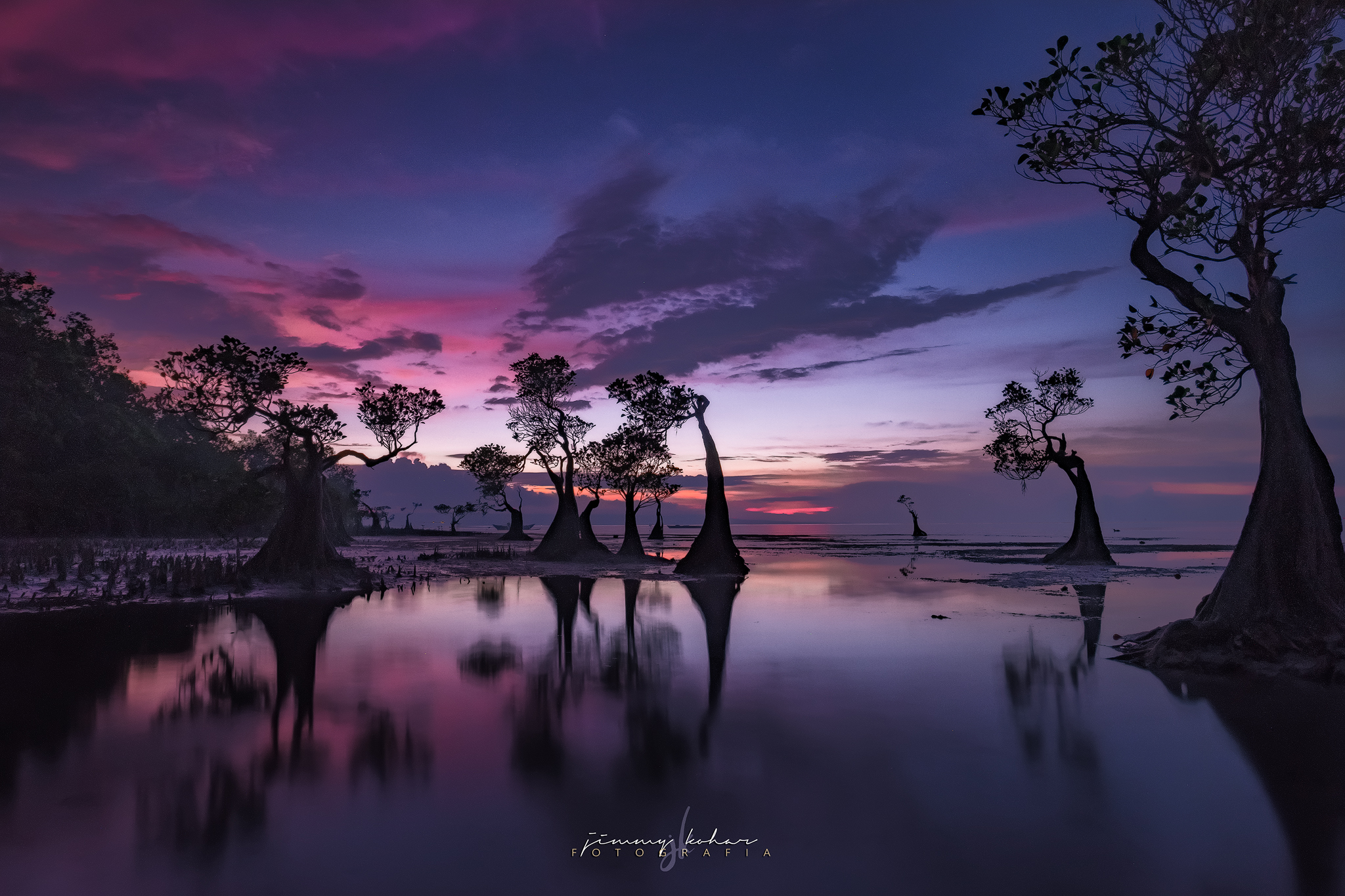 Mangrove Trees of Walakiri Beach, Indonesia