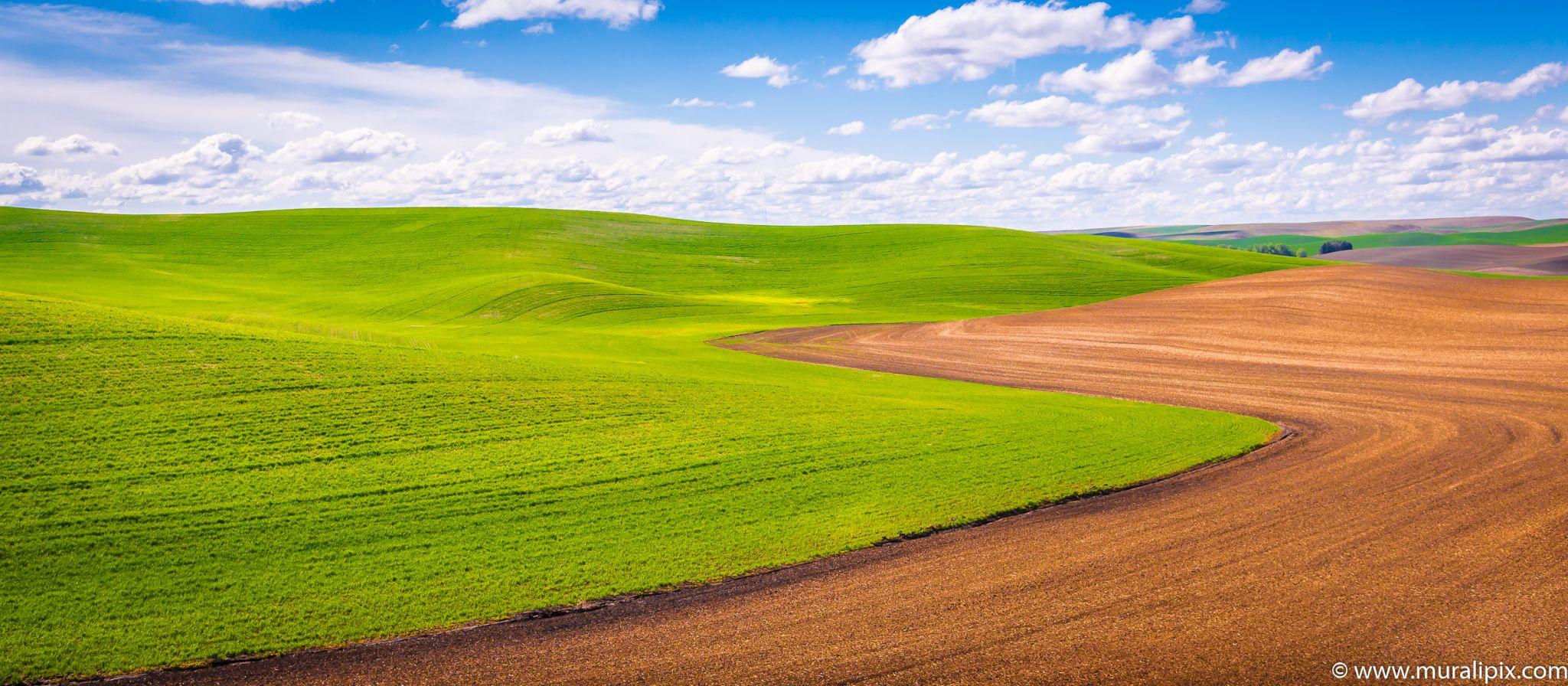 Palouse Field, USA