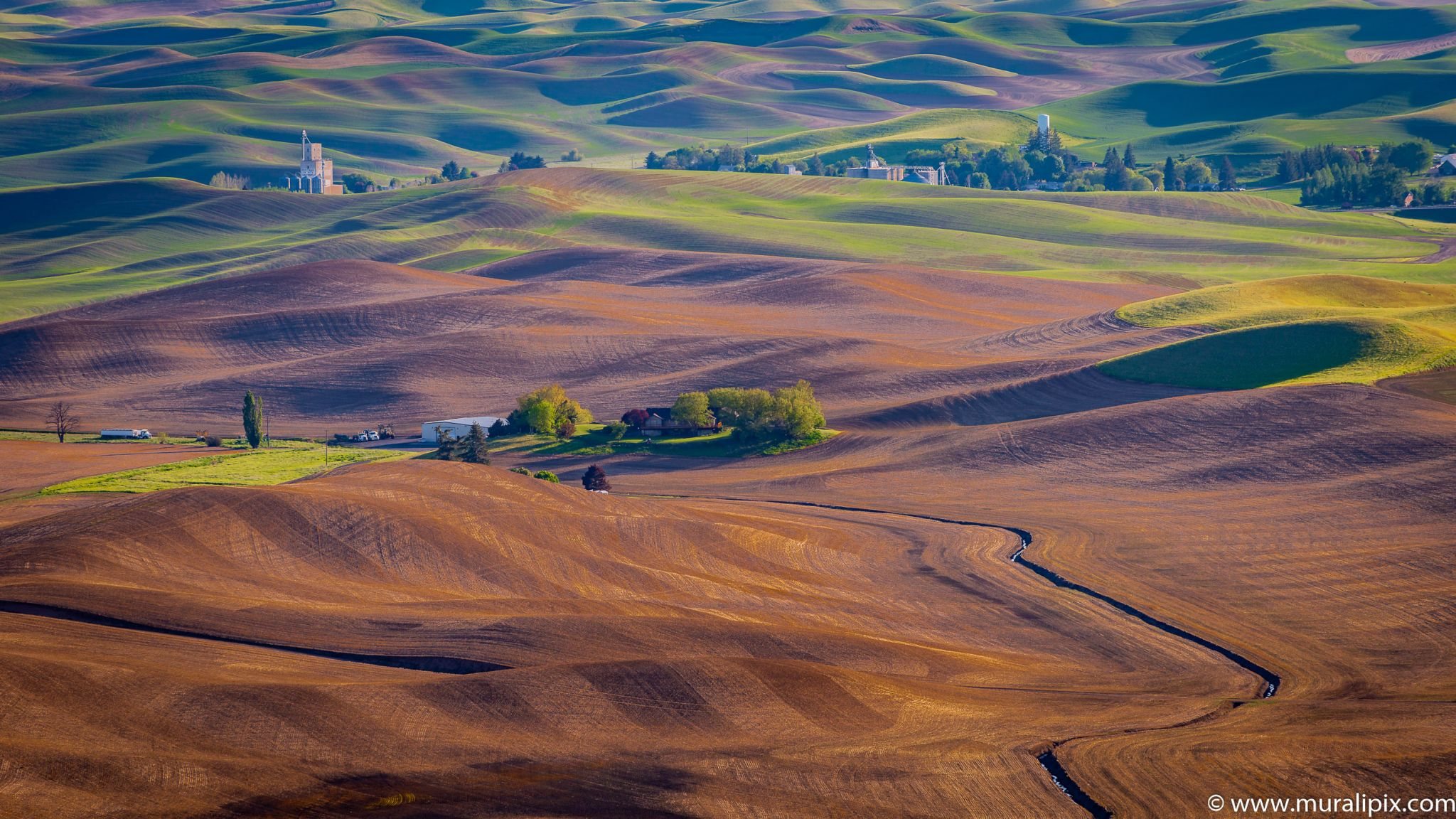Palouse from Road to the top of Steptoe Butte, USA