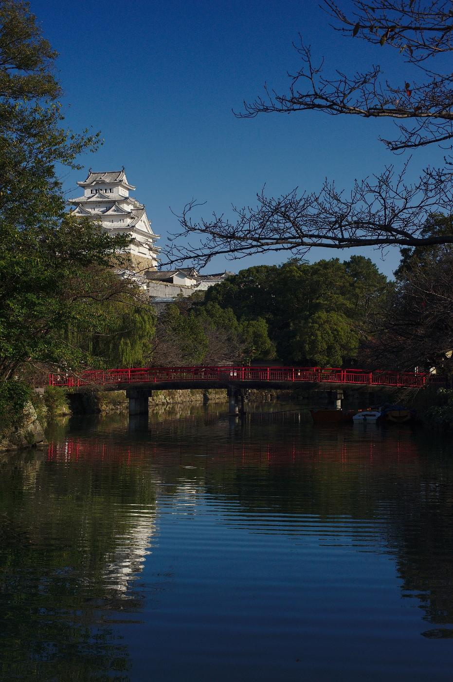 Sakura view of Himeji-jo, Japan