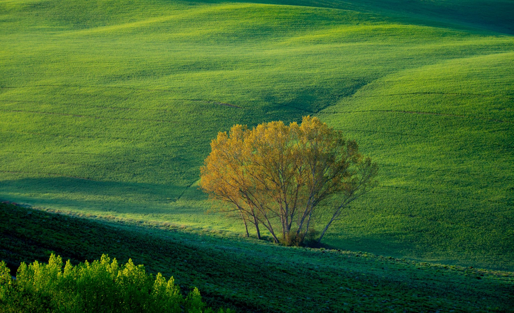 trees in a valley, Italy