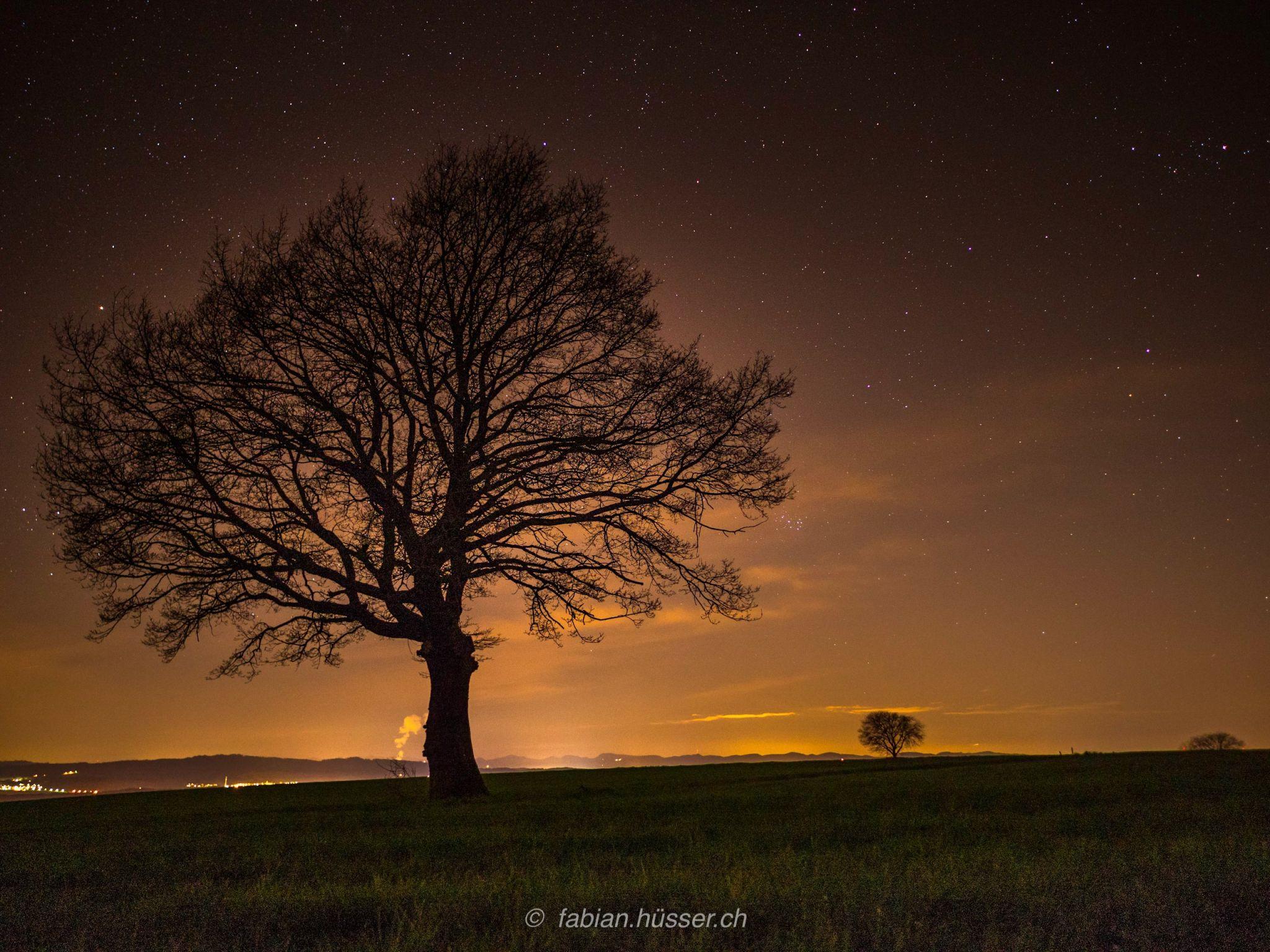 trees@stars, Switzerland