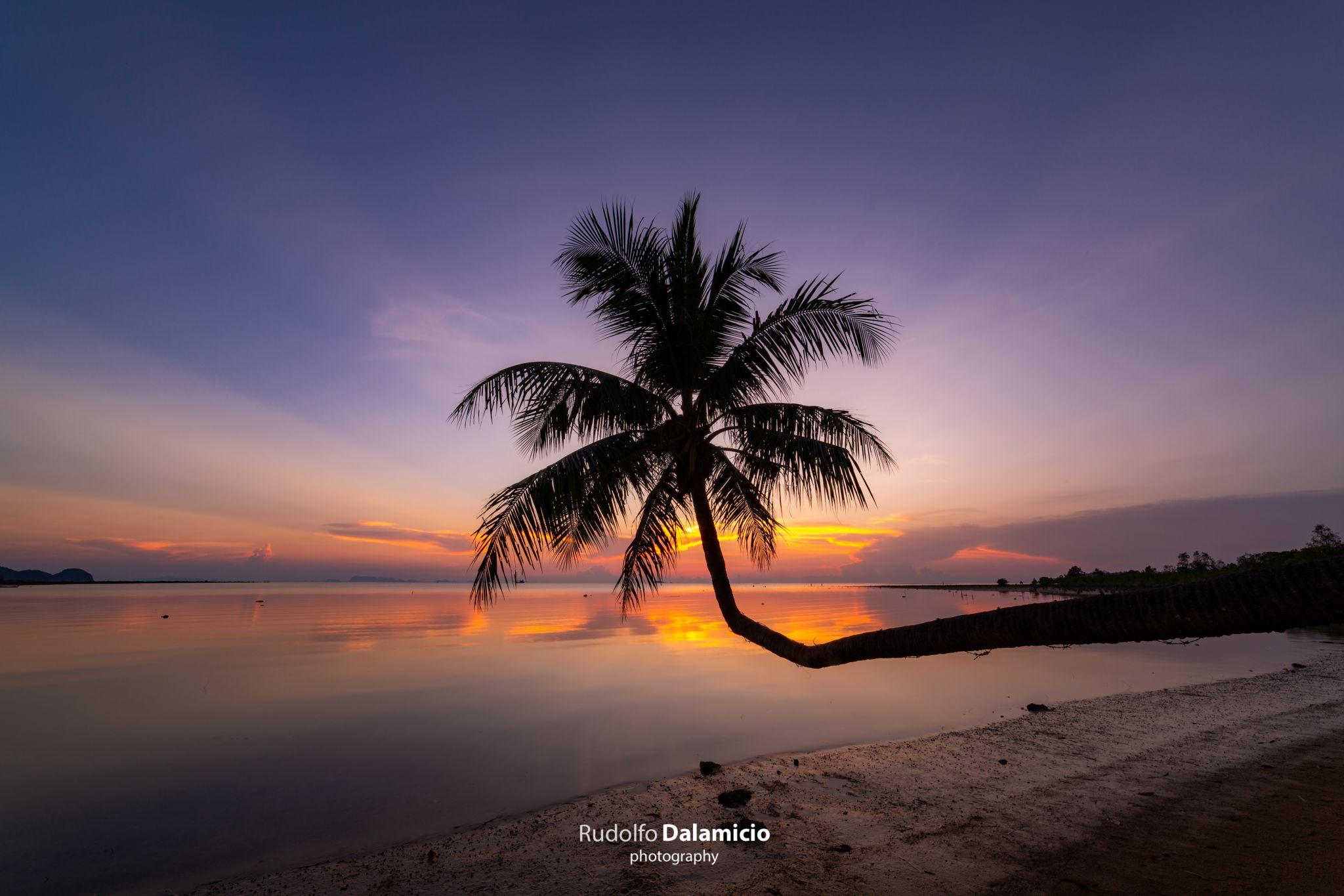 Tropical Palmtree, Thailand