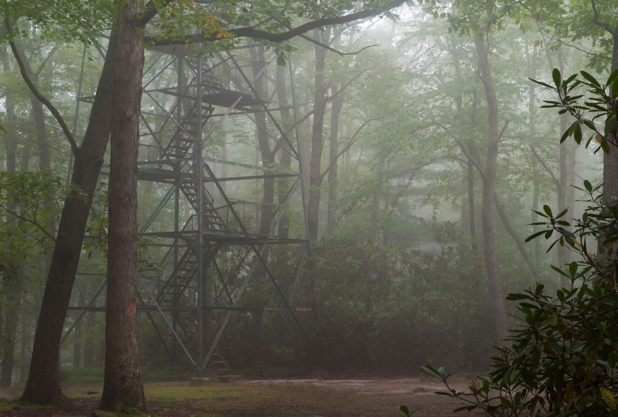 Cook Forest Tower, USA