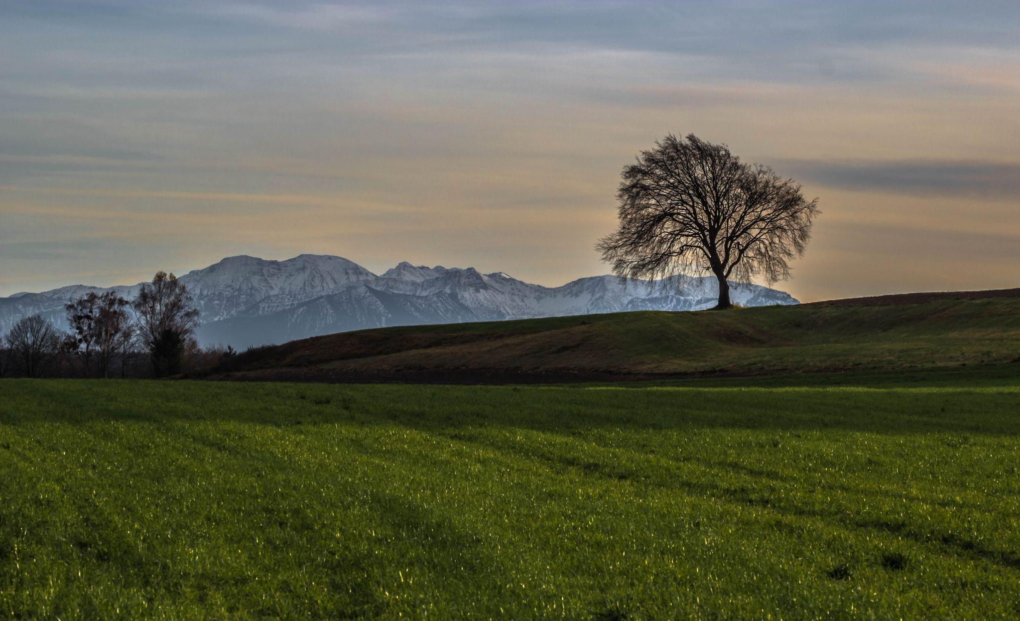 Einsamer Baum, Germany