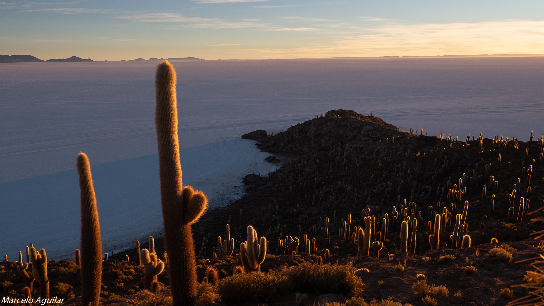 Incahuasi , cactus light, Bolivia
