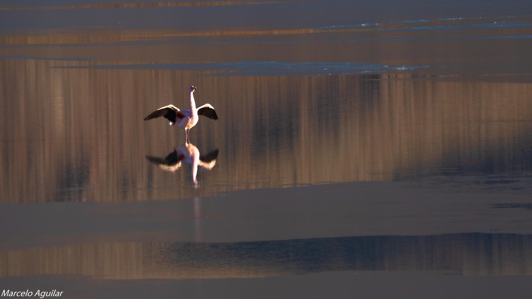 Laguna Hedionda at sunrise, Bolivia