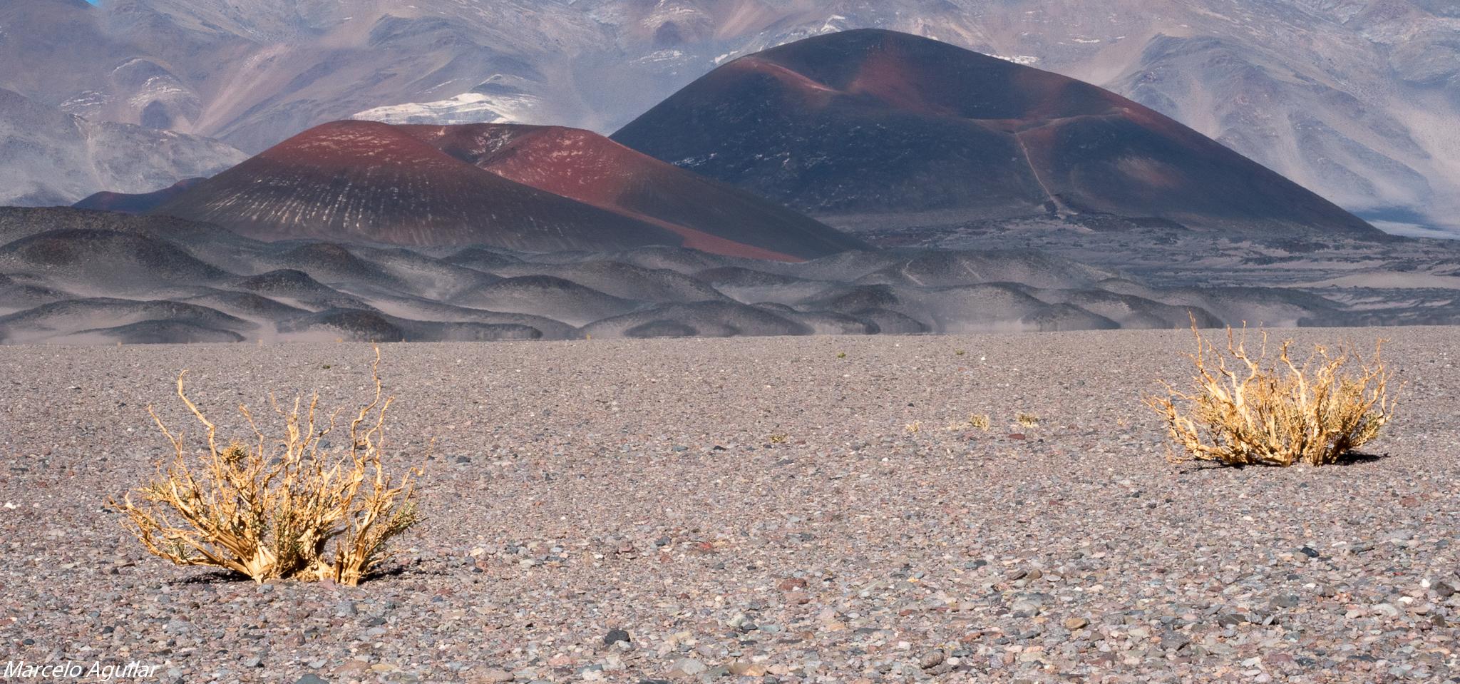 near Antofagasta de la Sierra, Argentina