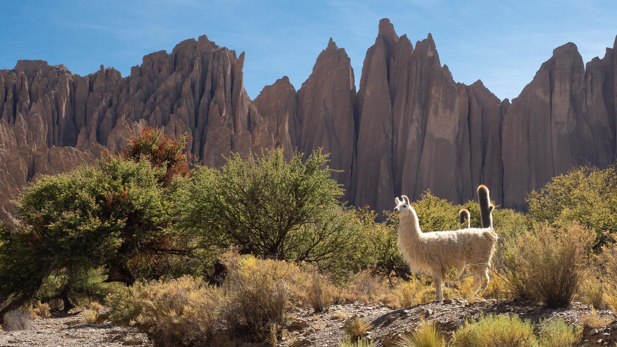 Near Tupiza, Bolivia