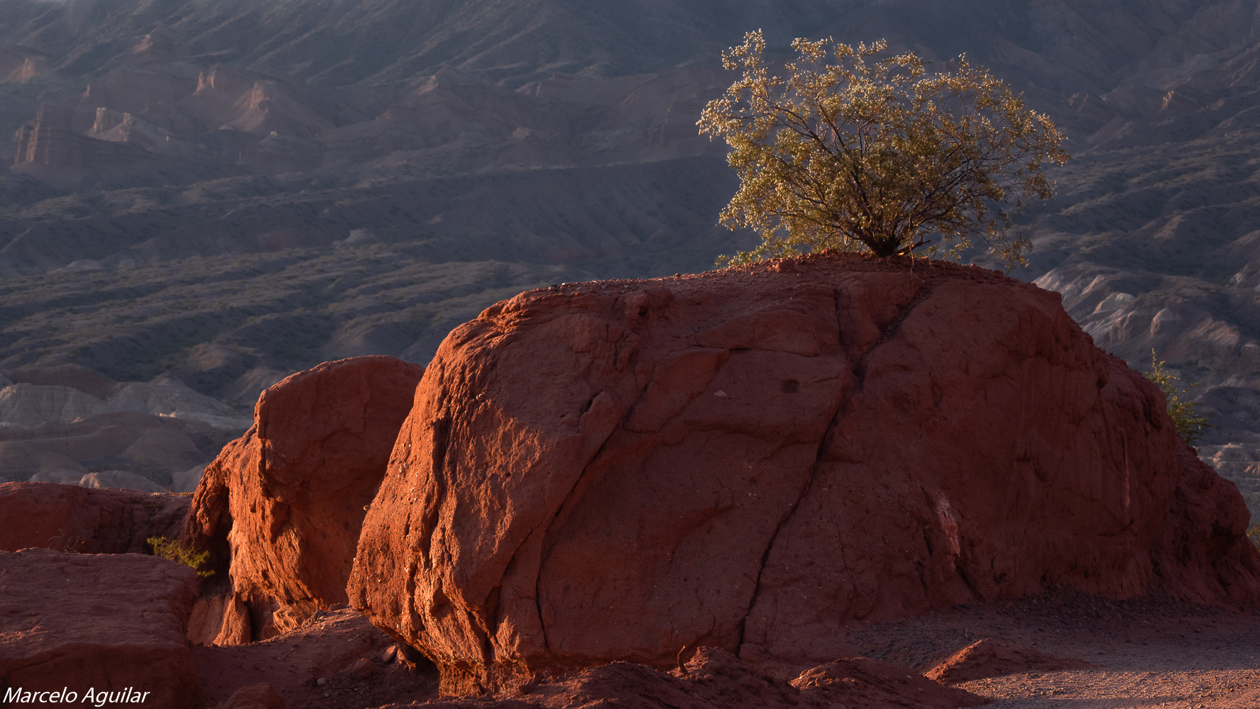 Rock and tree in las conchas, Argentina