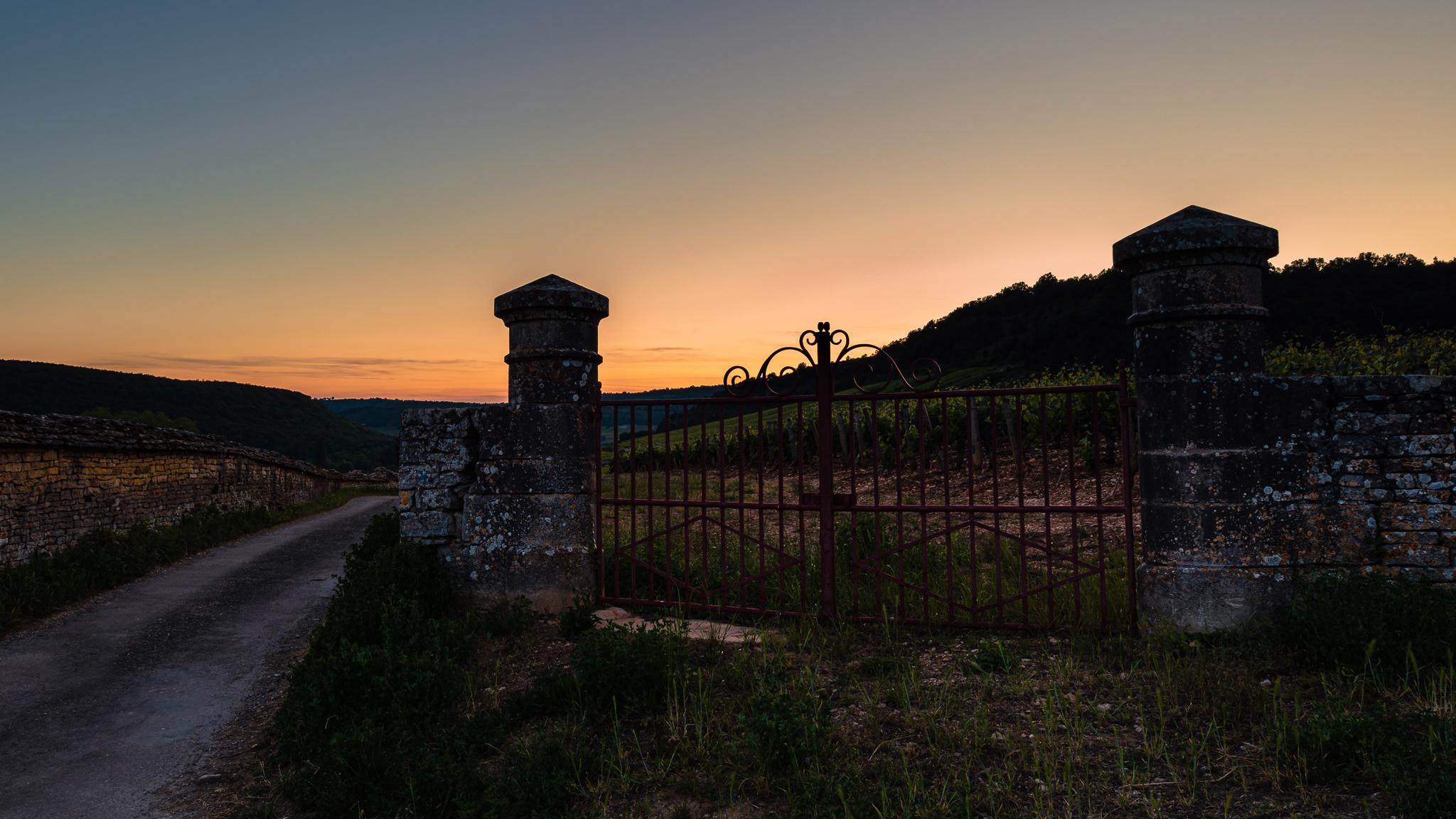The vineyards after sunset..., France