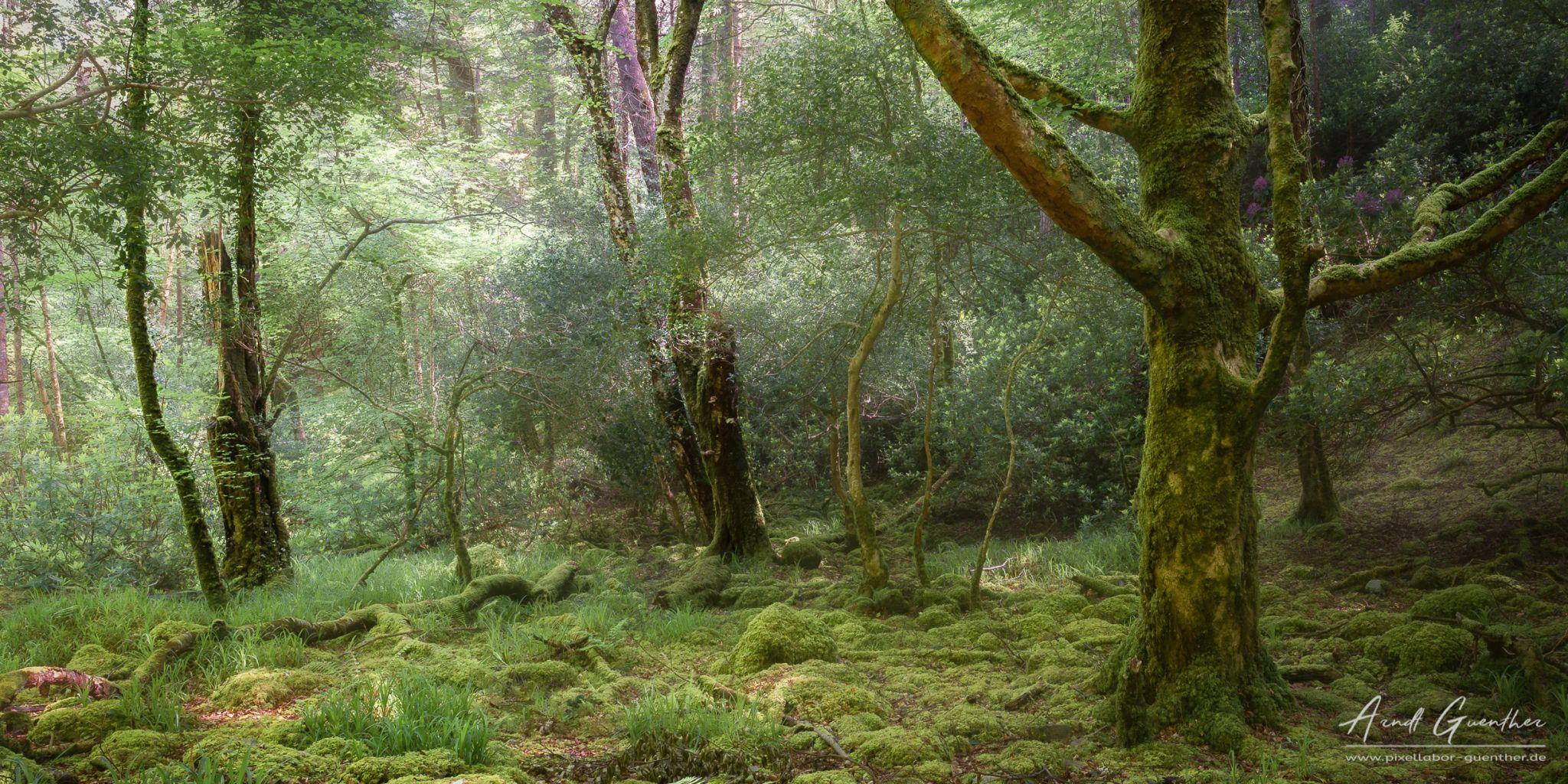 Torc Waterfall Forrest, Ireland