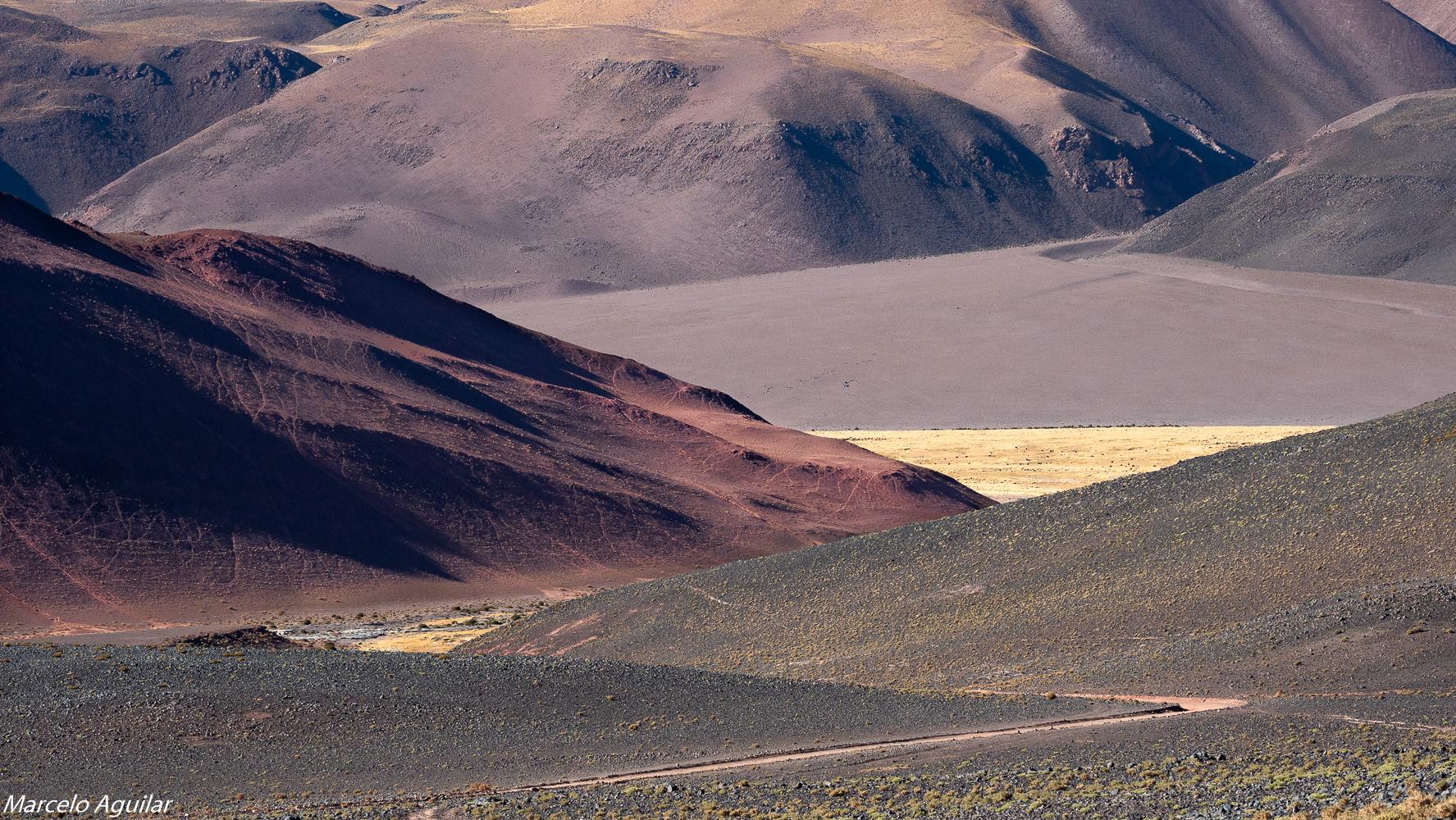 Vega colorada, Argentina