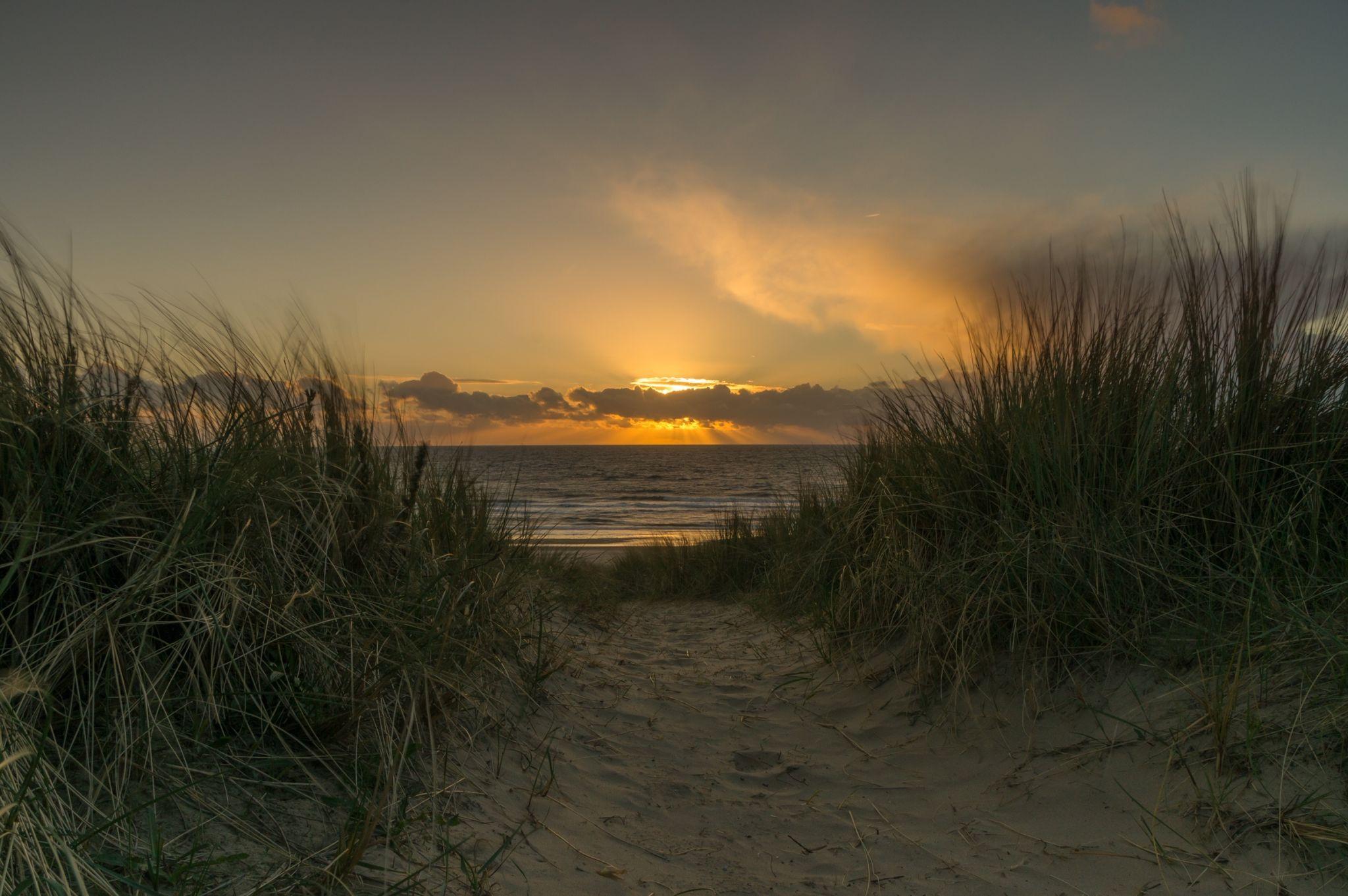 Dunes, Egmond aan Zee, Netherlands
